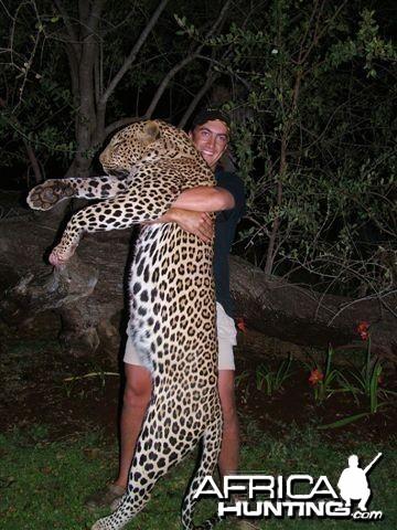 leopard taken in limpopo province. shot over bait just before sun set