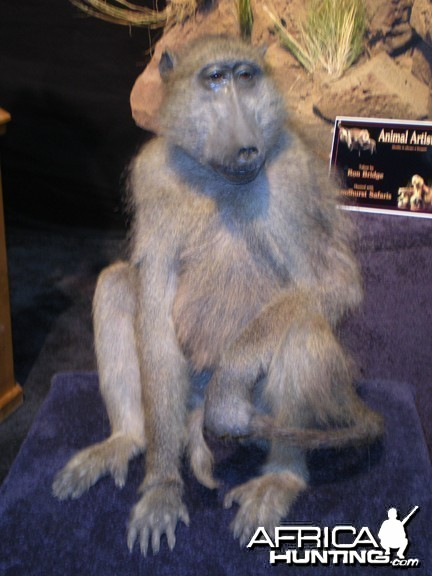 Taxidermy Baboon