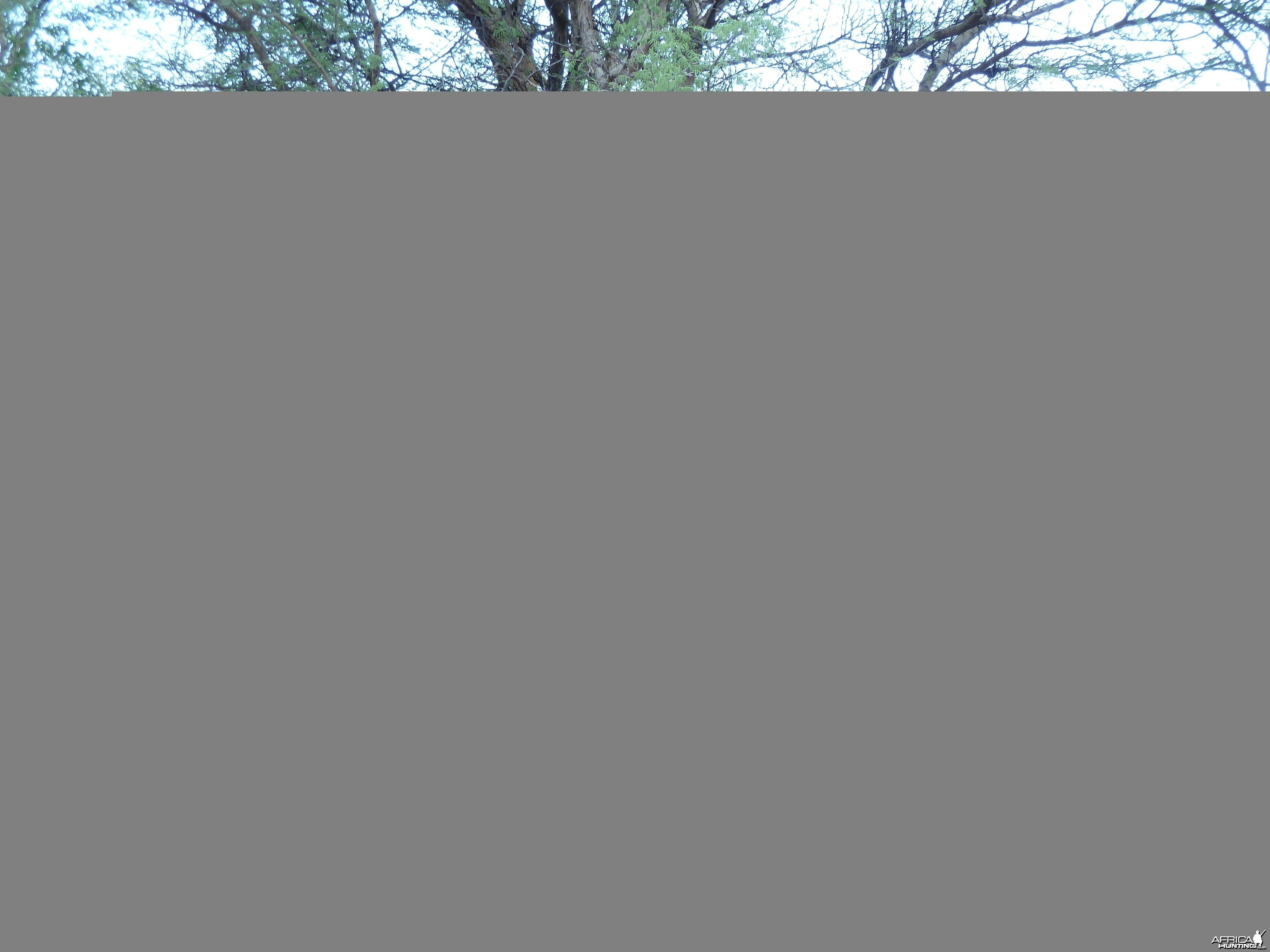 Omajowa termite hill mushrooms Namibia