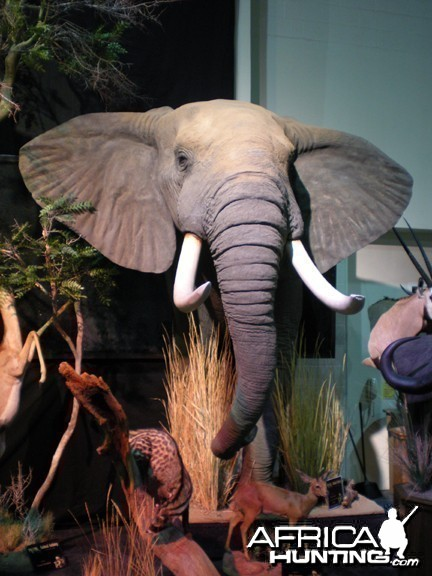 Taxidermy Elephant