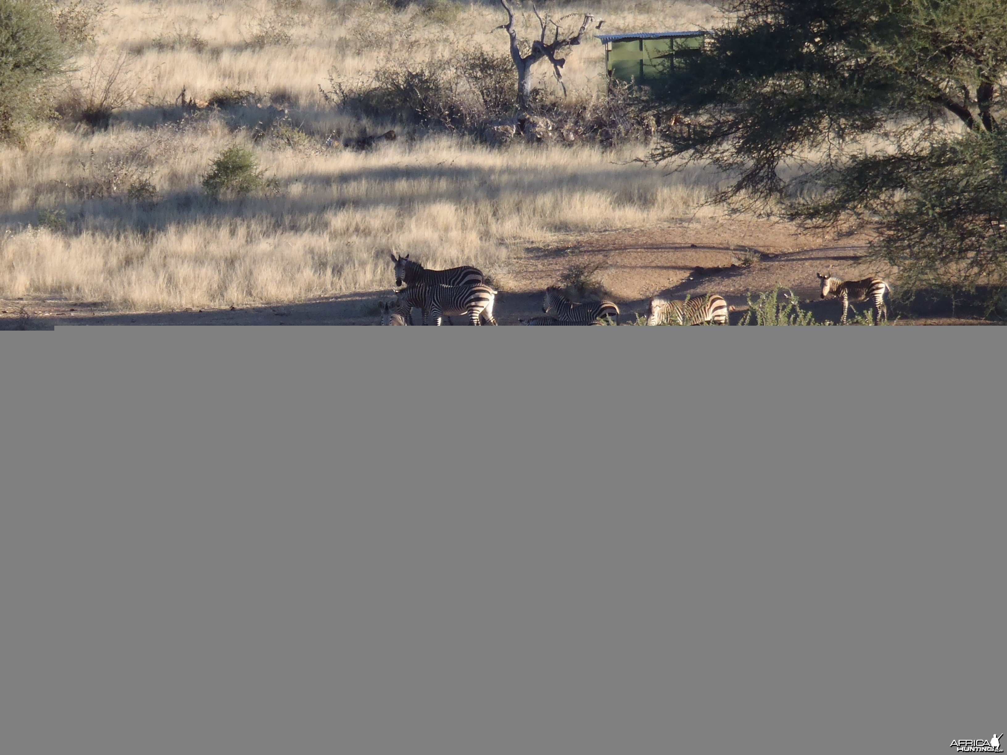 Mountain Zebras Namibia