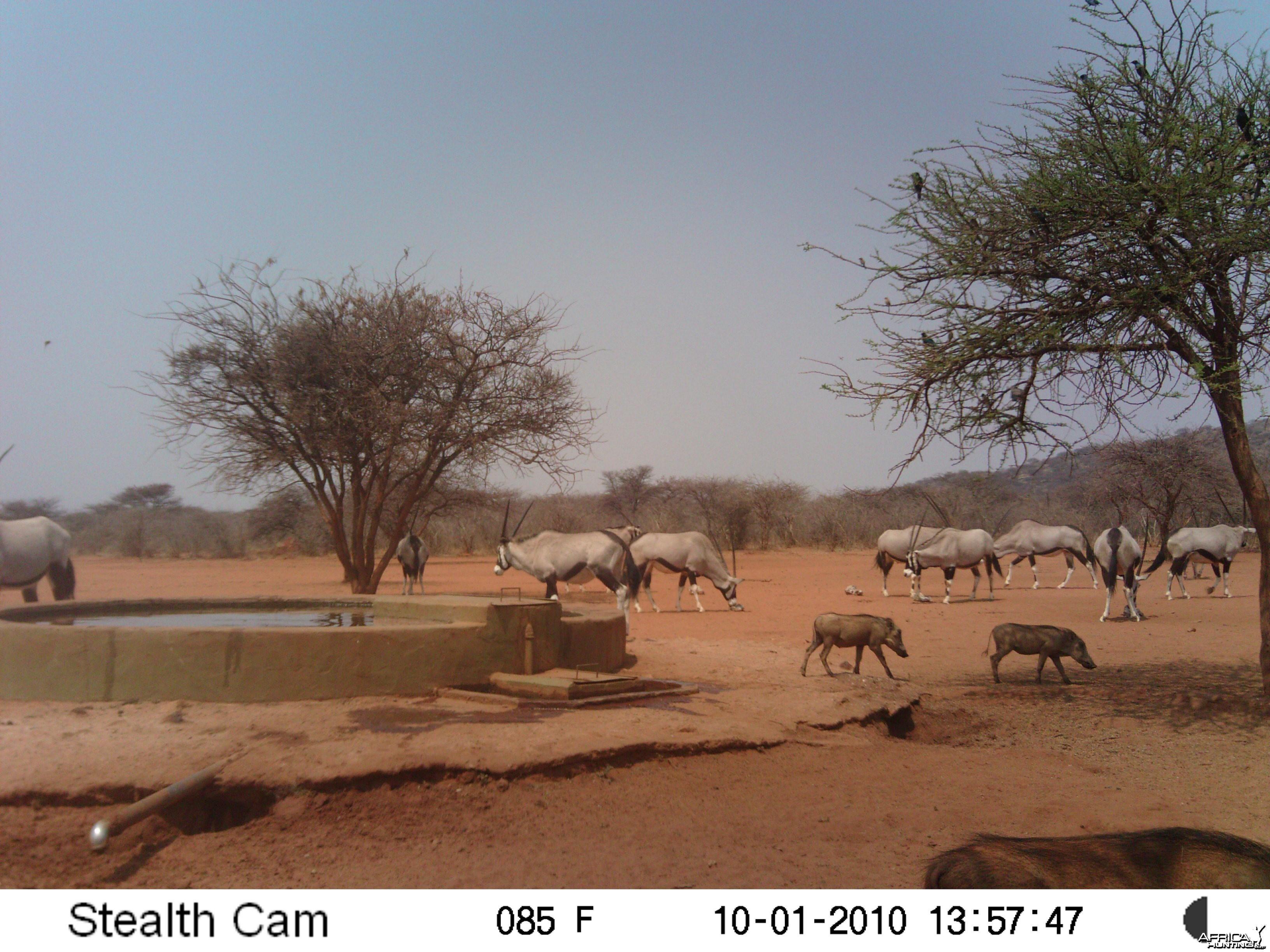 Trail Cam Namibia