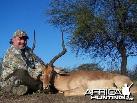Impala ram taken in the Limpopo Province of South Africa