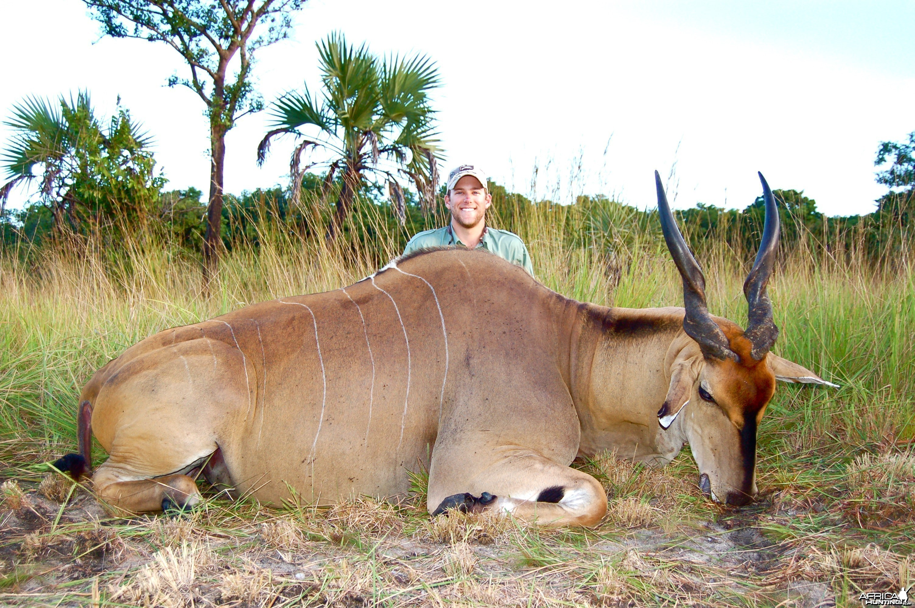 Livingstone's Eland Taken in Coutada 11, Mozambique, June 2010