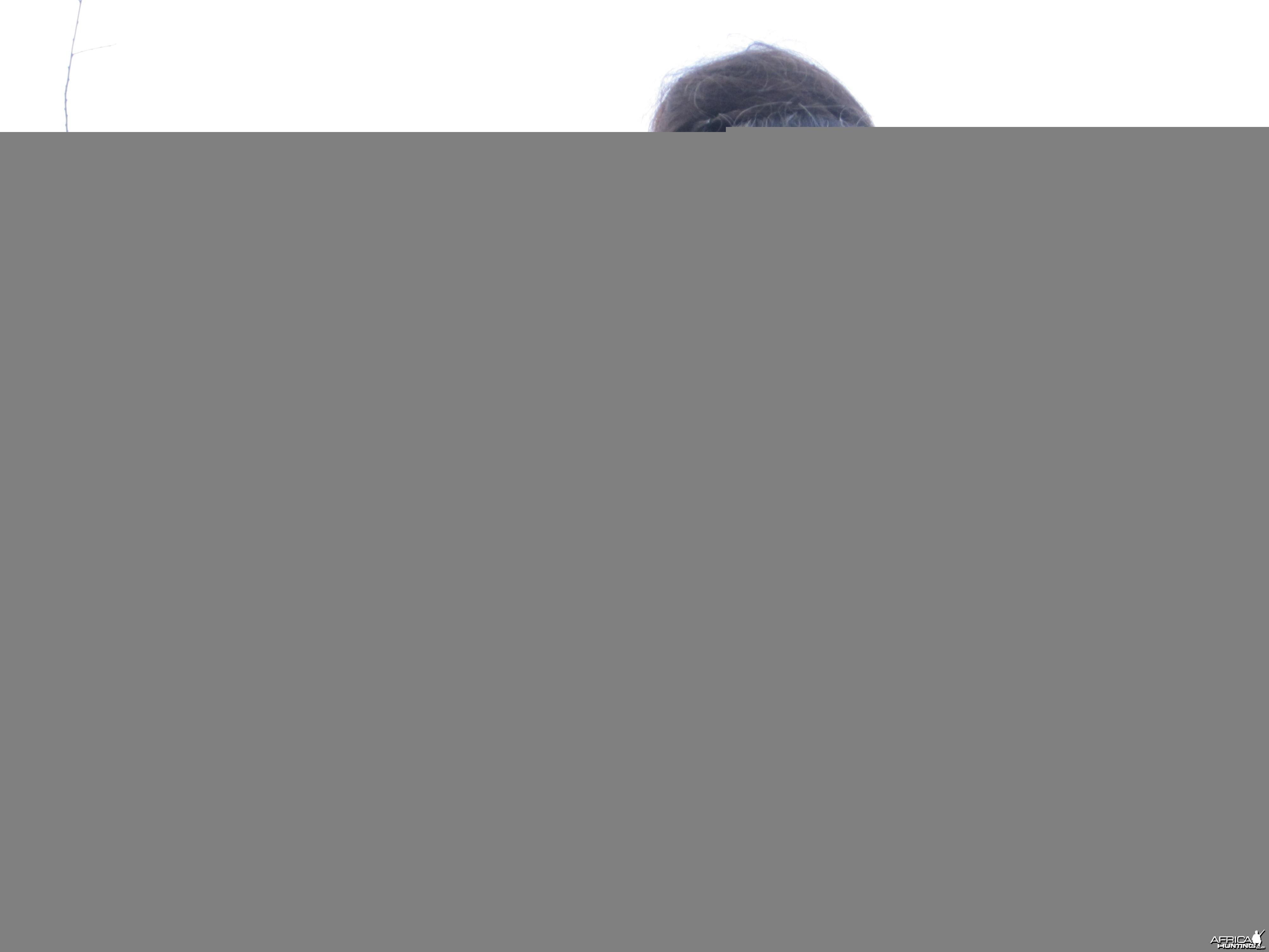 hunting Gunther's Dik-Dik Uganda