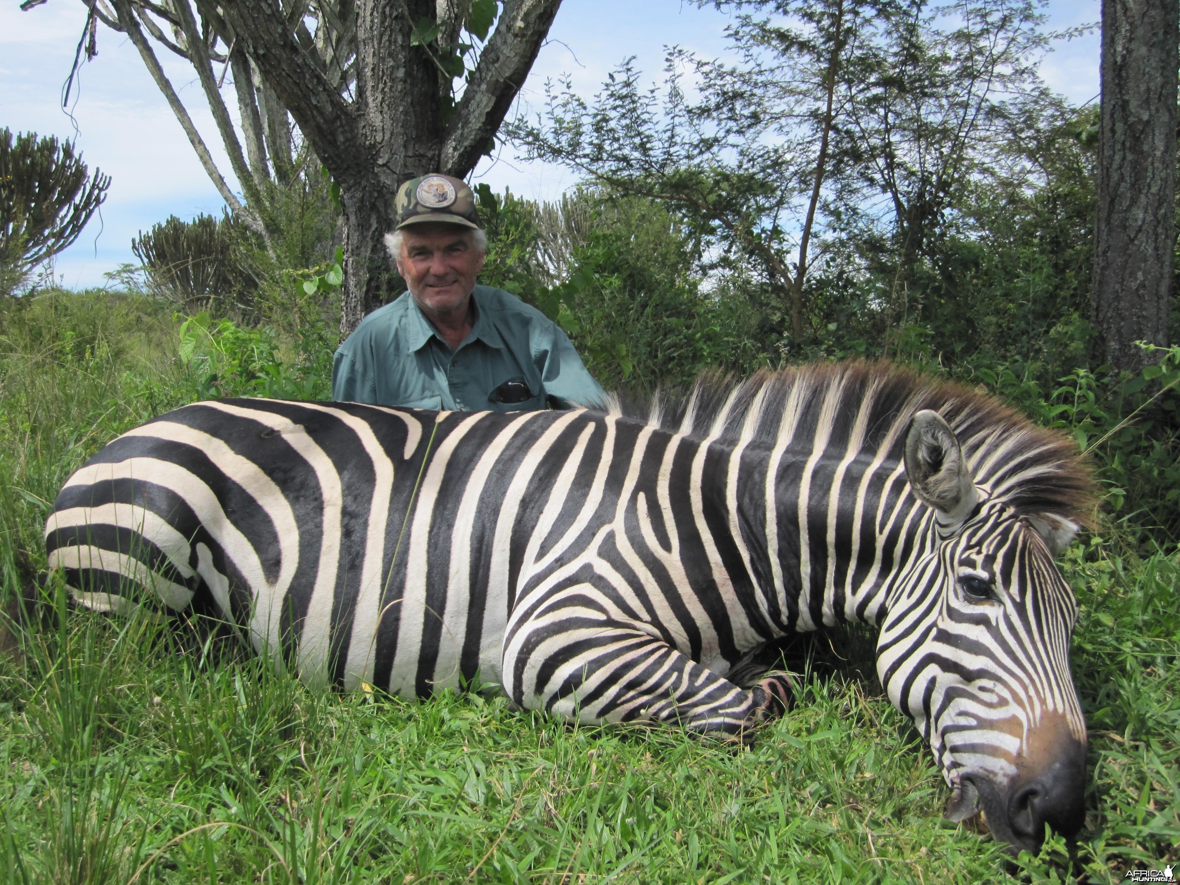 Hunting Zebra Uganda