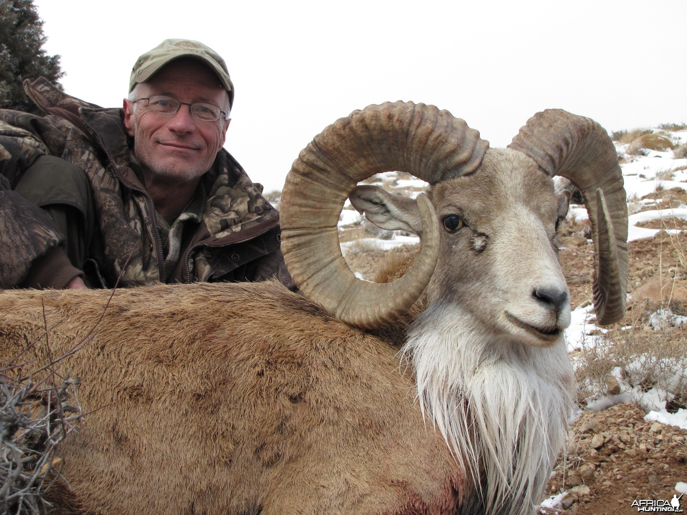 Hunting Urial in Iran