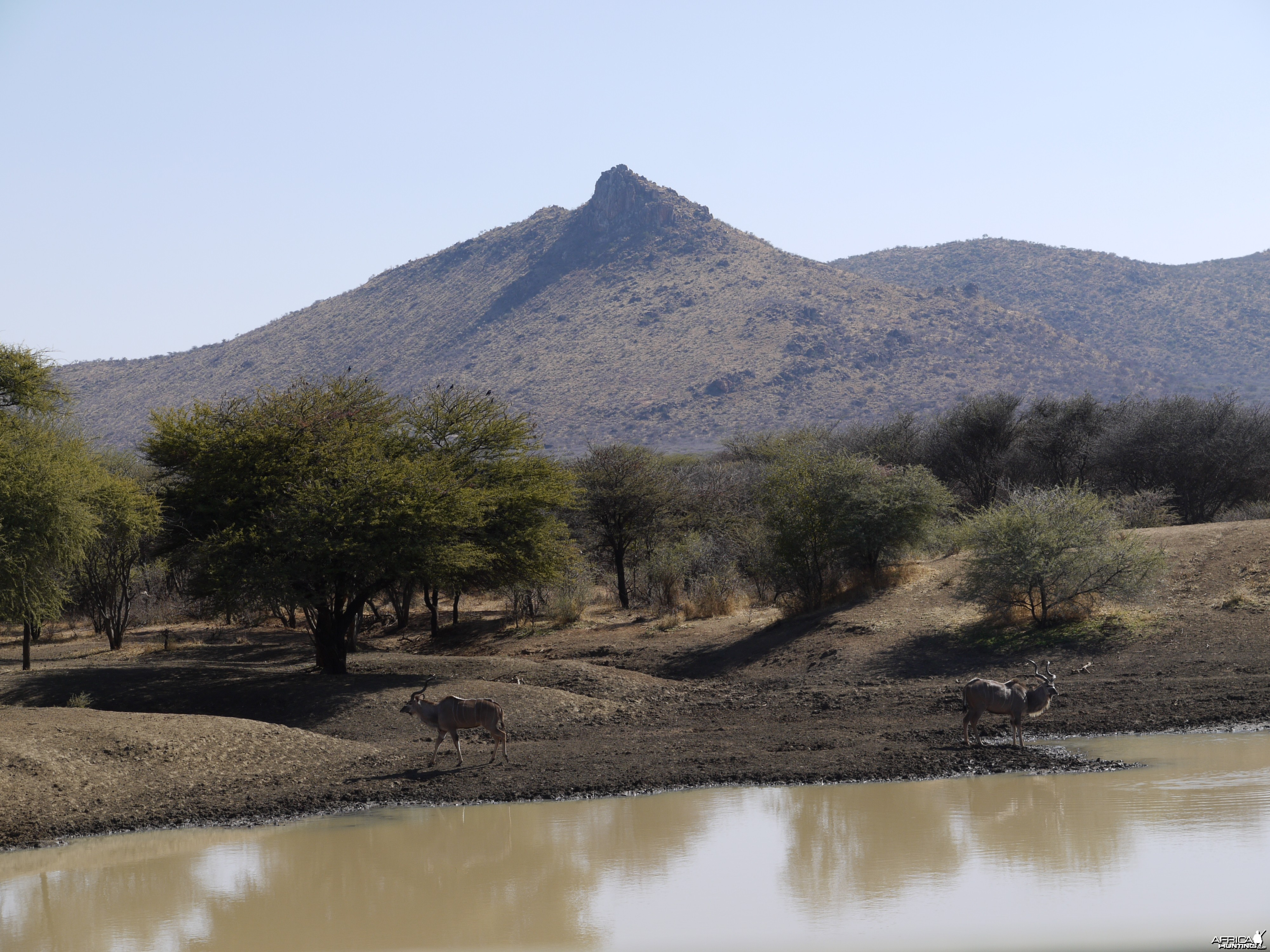 Kudu at waterhole in Namibia
