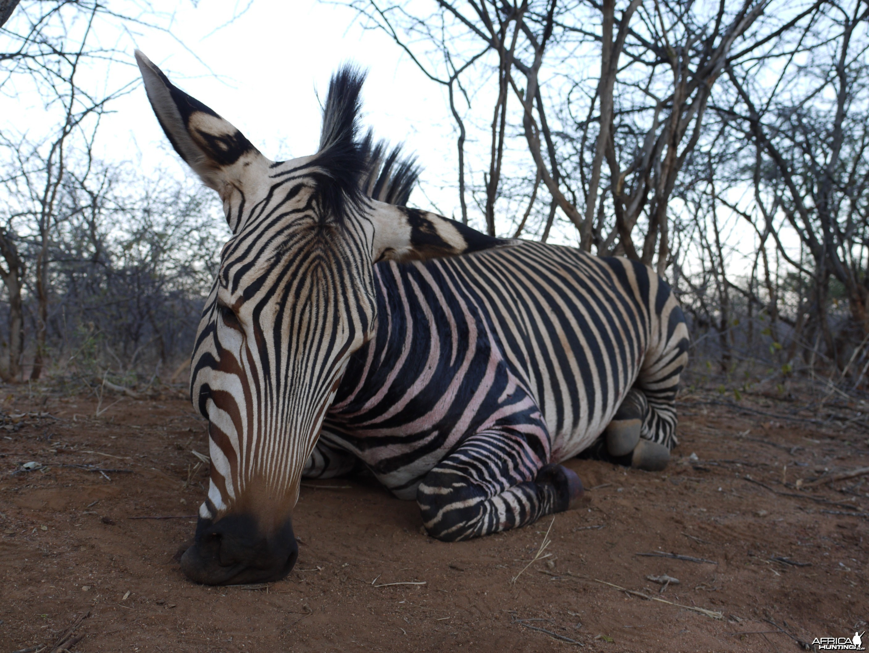 Hunting Hartmann's Zebra in Namibia