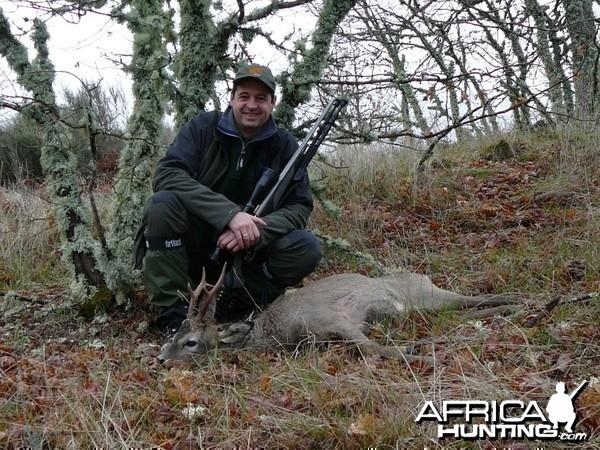 Spanish Roe Deer