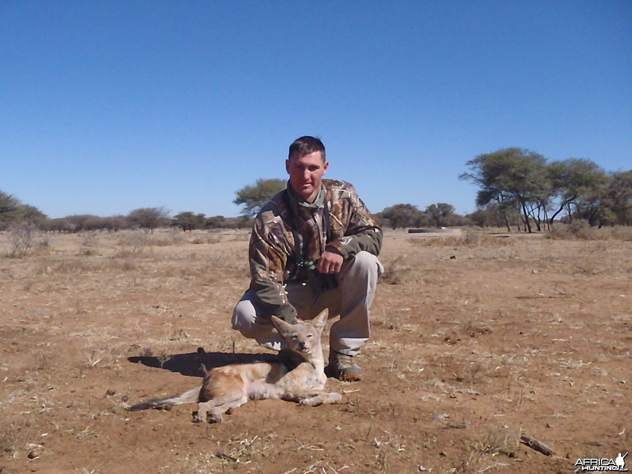 Hunting Black-backed in Namibia