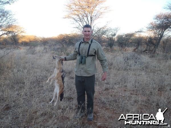 Hunting Jackal