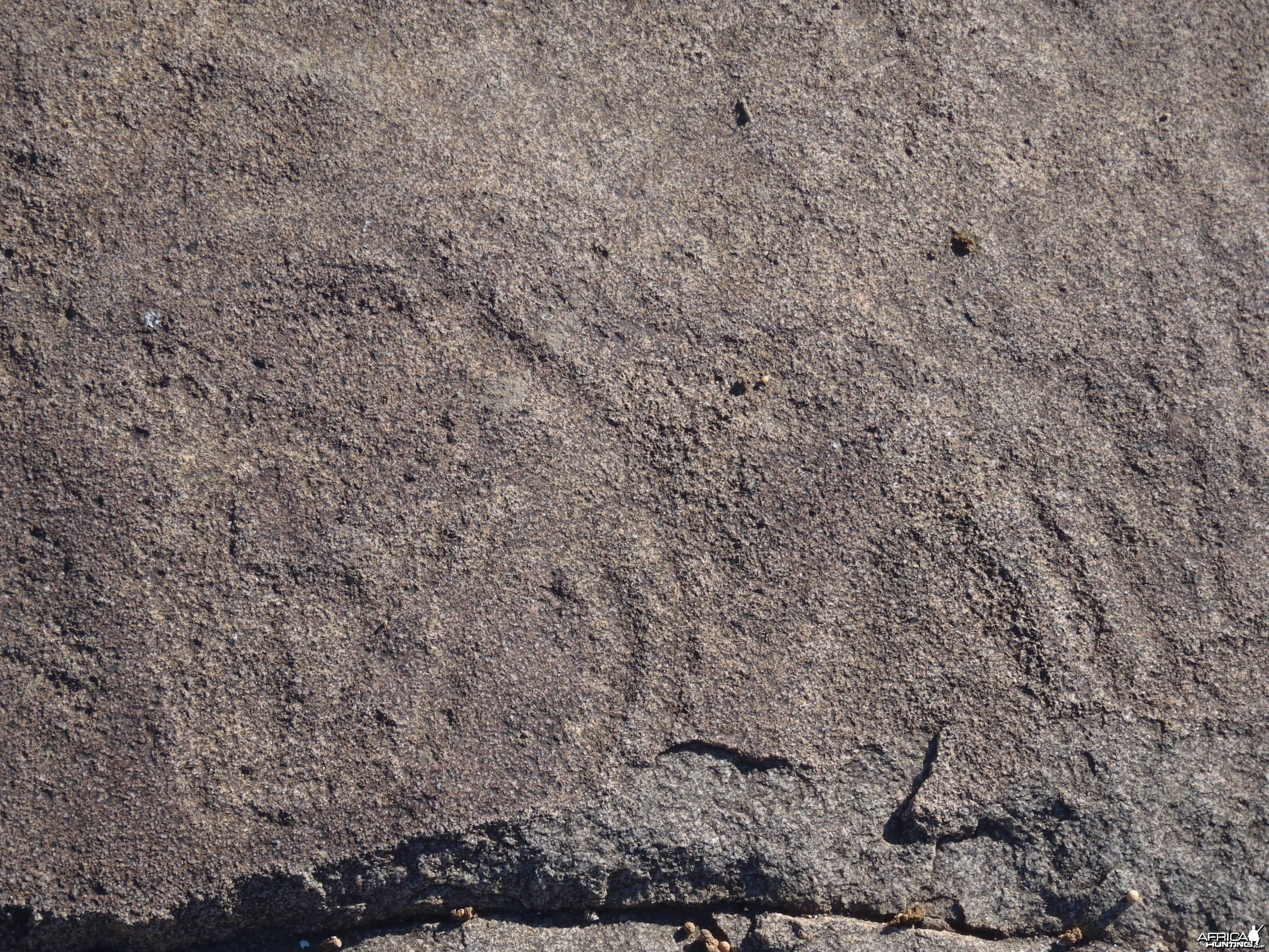 Bushman rock engraving of Giraffe in Namibia