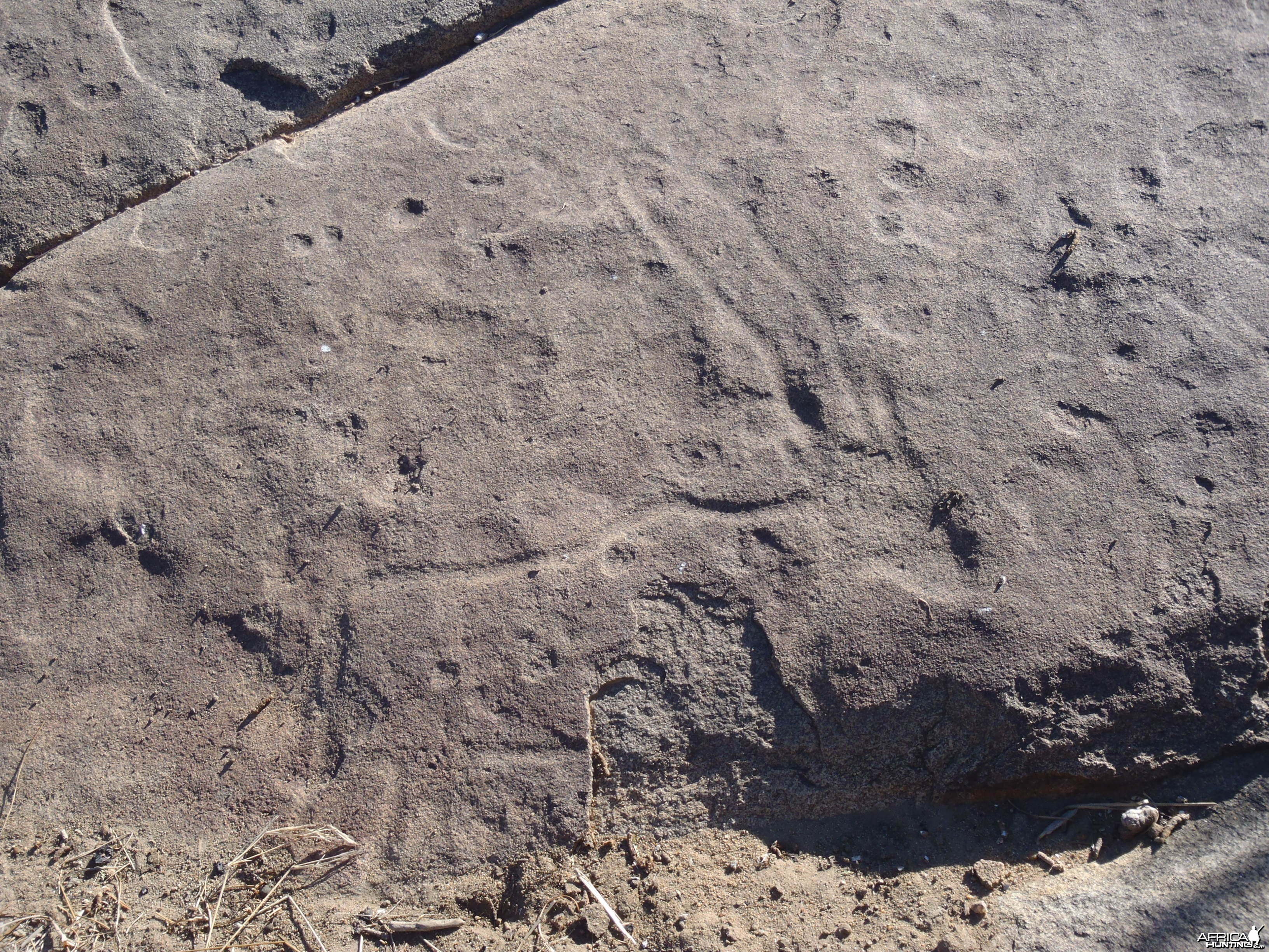 Bushman rock engraving of Gemsbok in Namibia