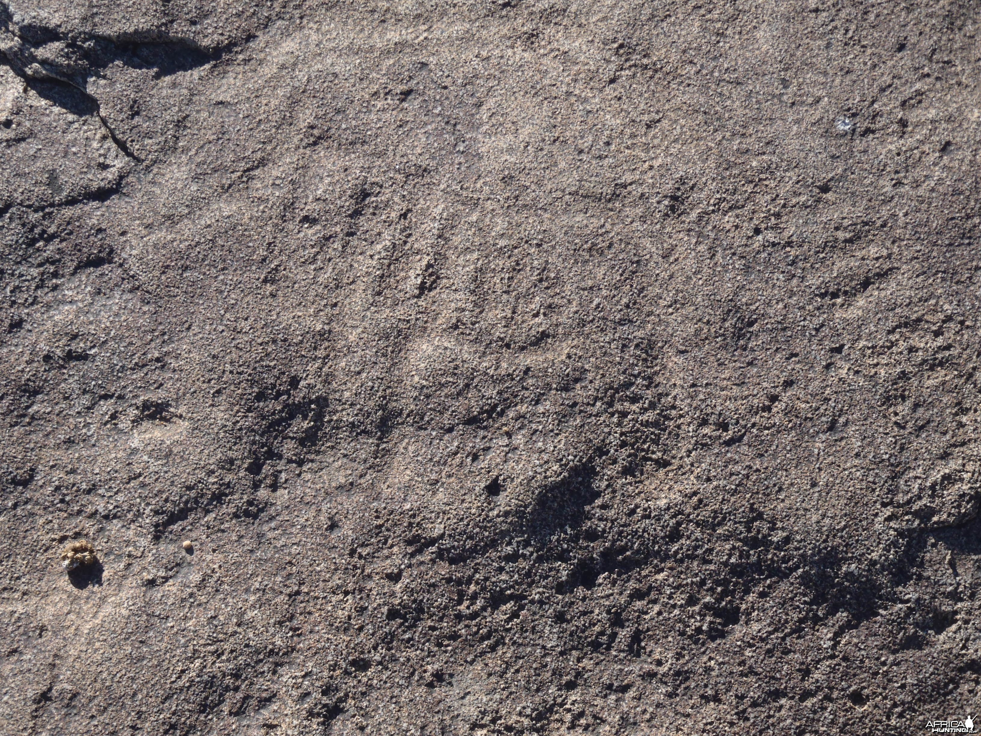 Bushman rock engraving of Lion in Namibia