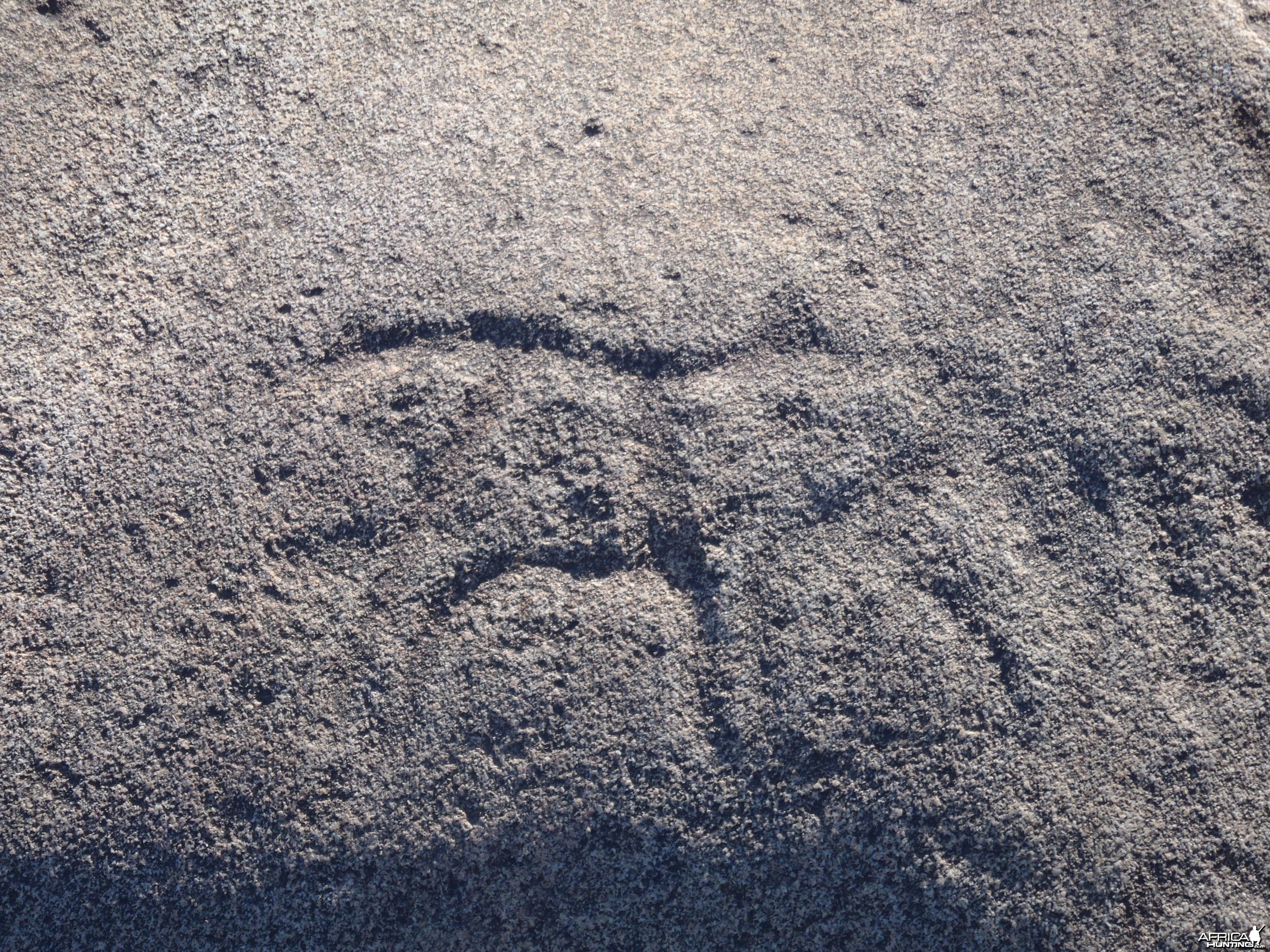 Bushman rock engraving of Warthog in Namibia
