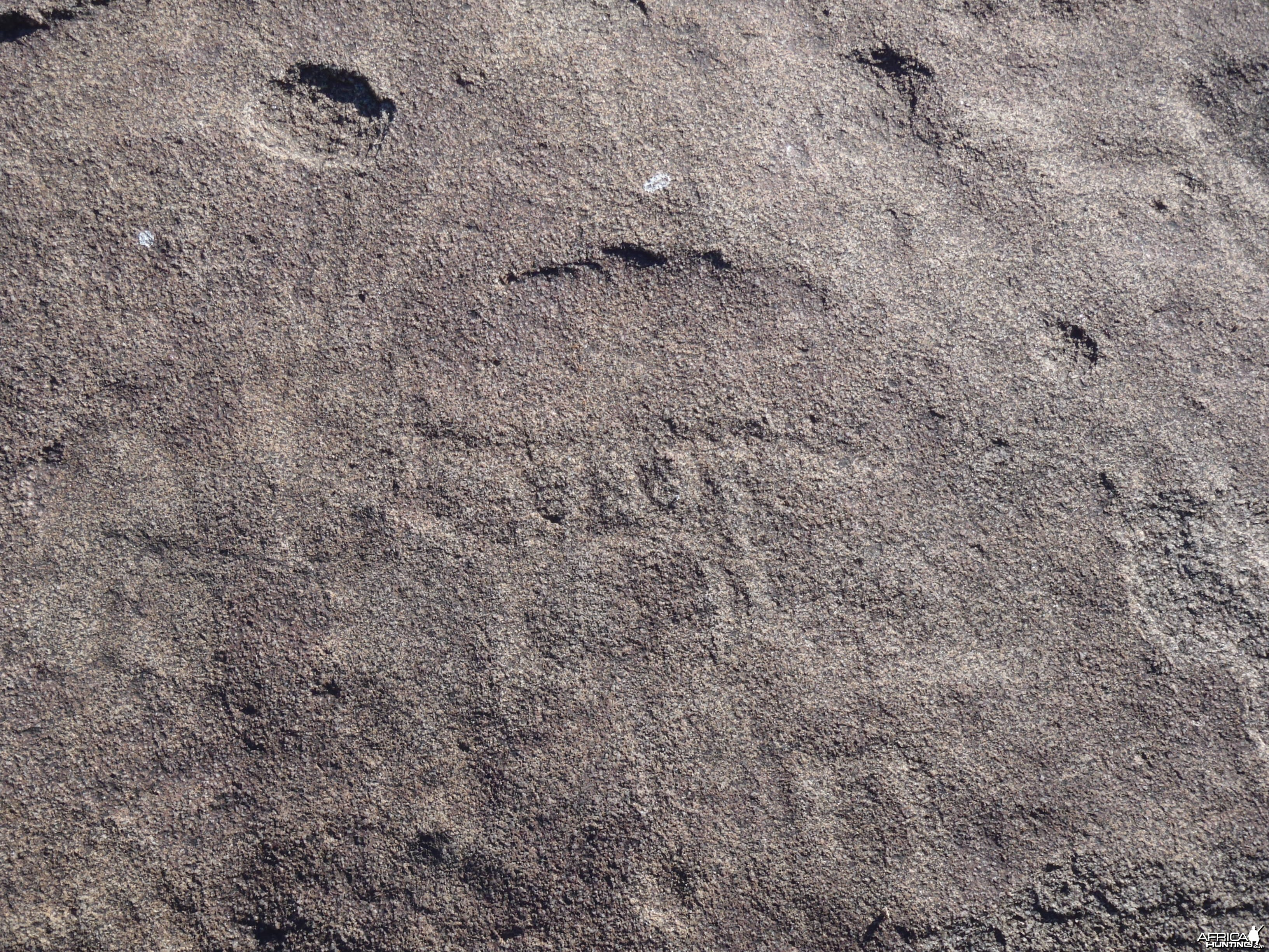 Bushman rock engraving of antelope in Namibia