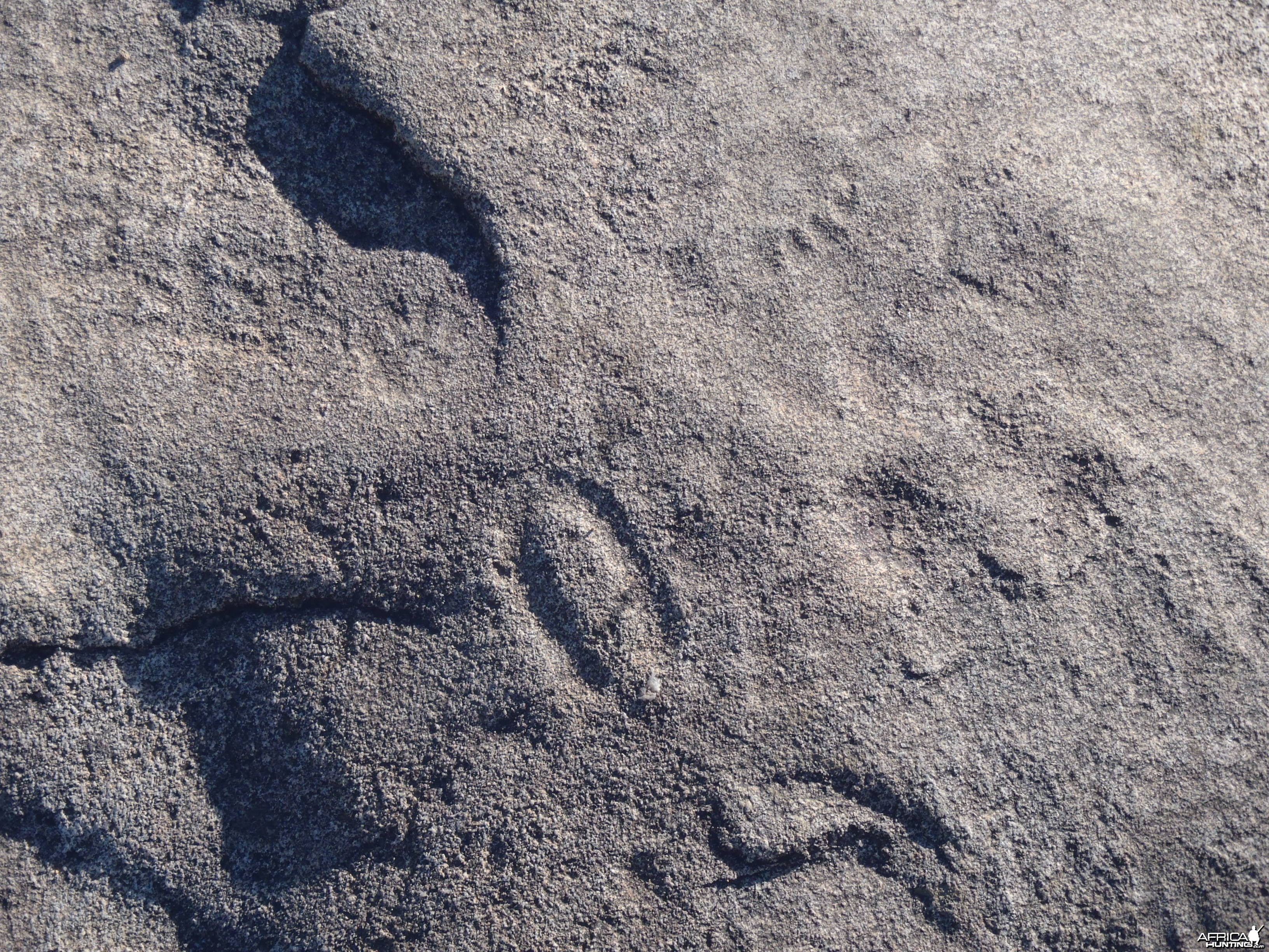 Animal prints in the rock in Namibia