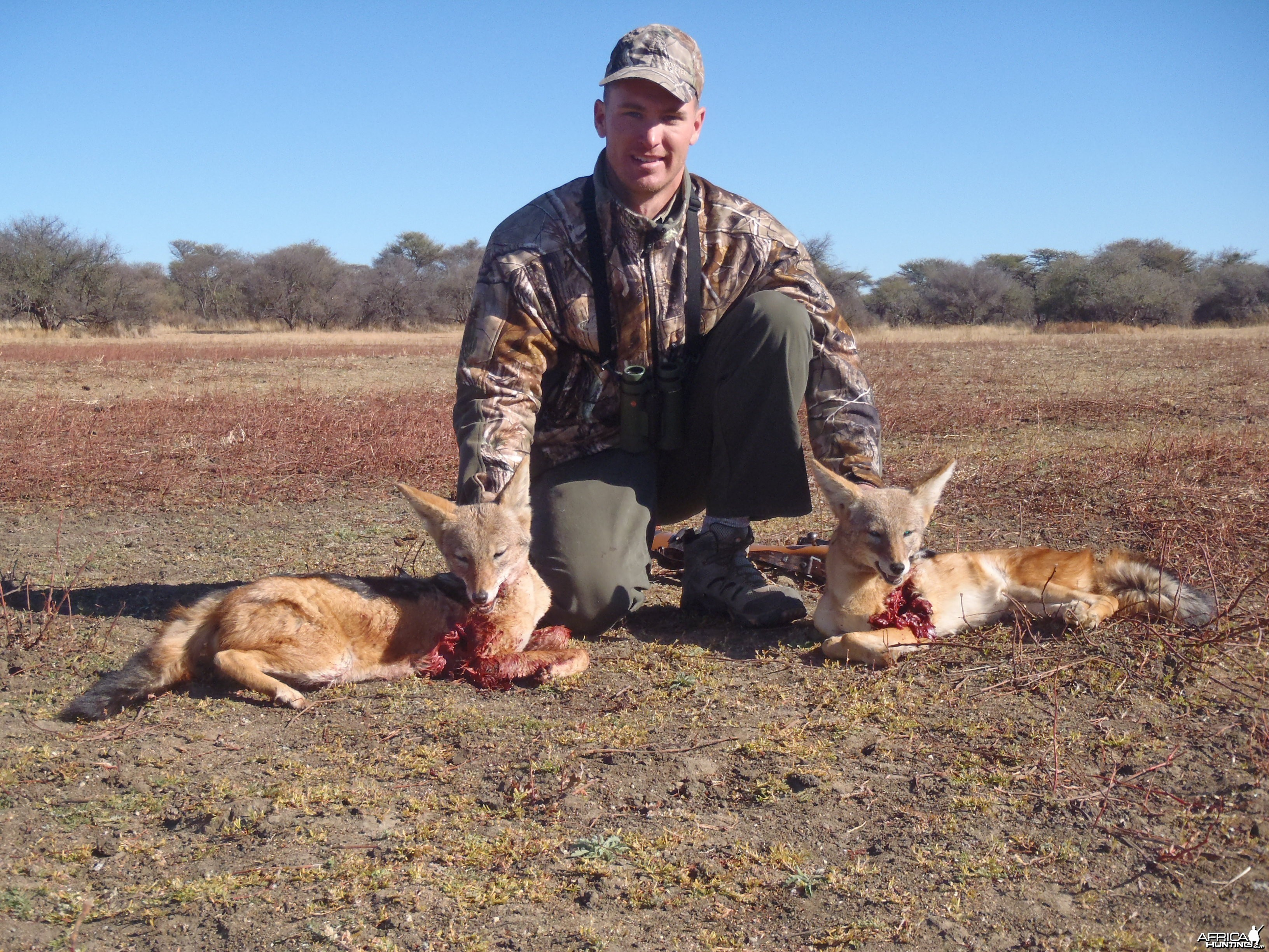 Hunting Black-backed Jackal in Namibia