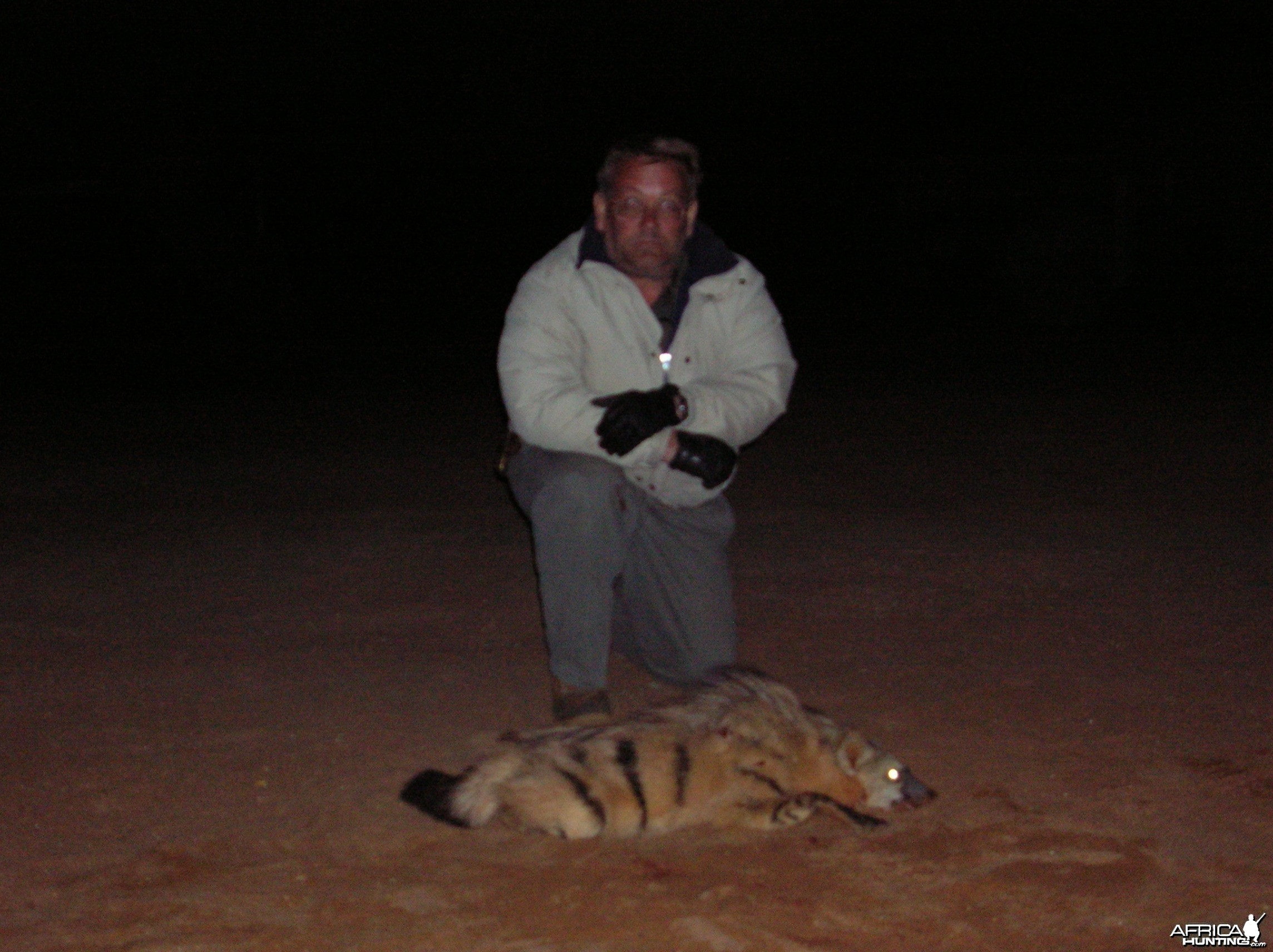 Aardwolf Hunted in Namibia