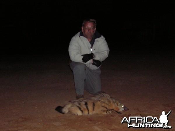 Aardwolf Hunted in Namibia