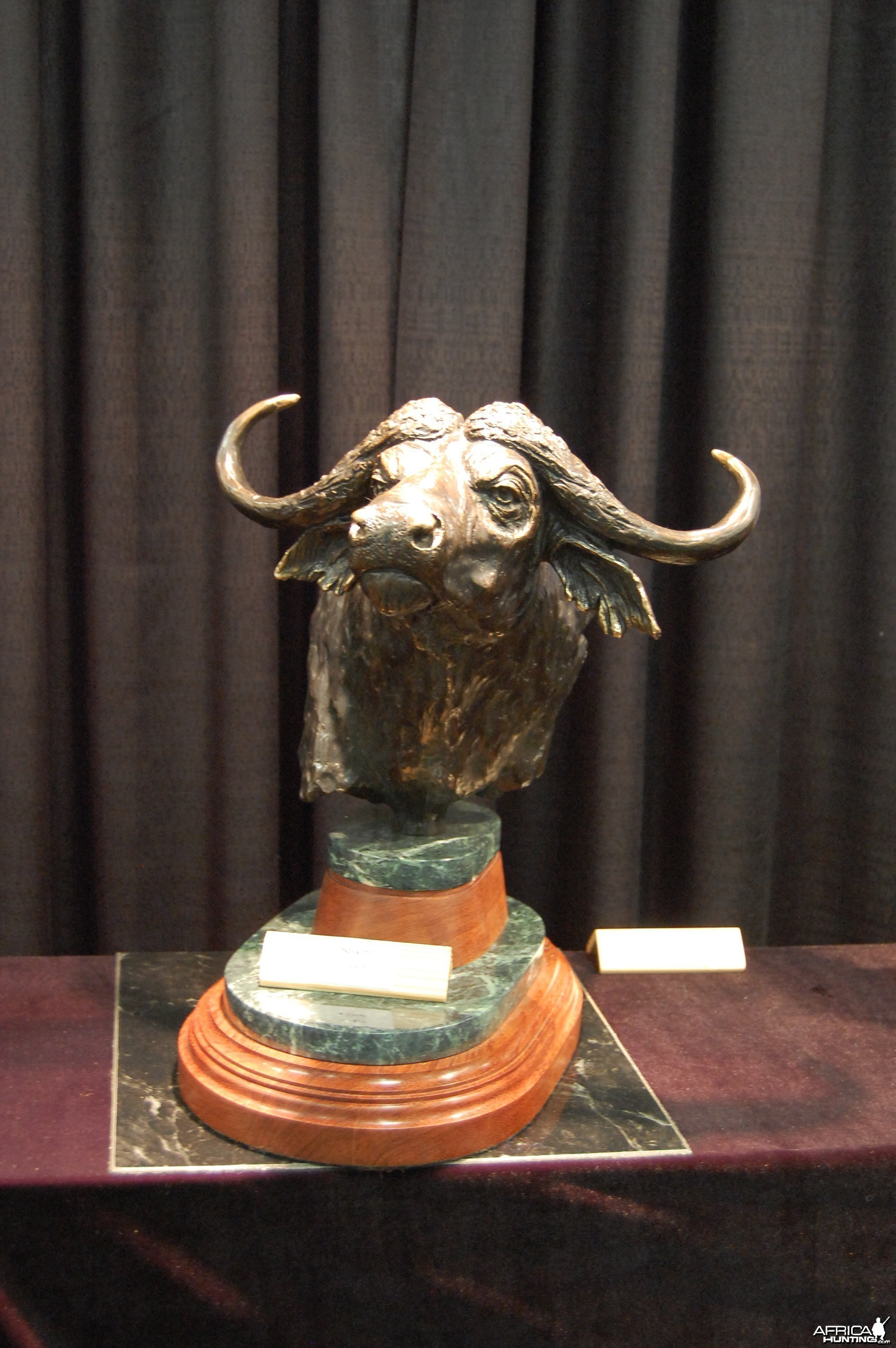 Cape Buffalo Bronze