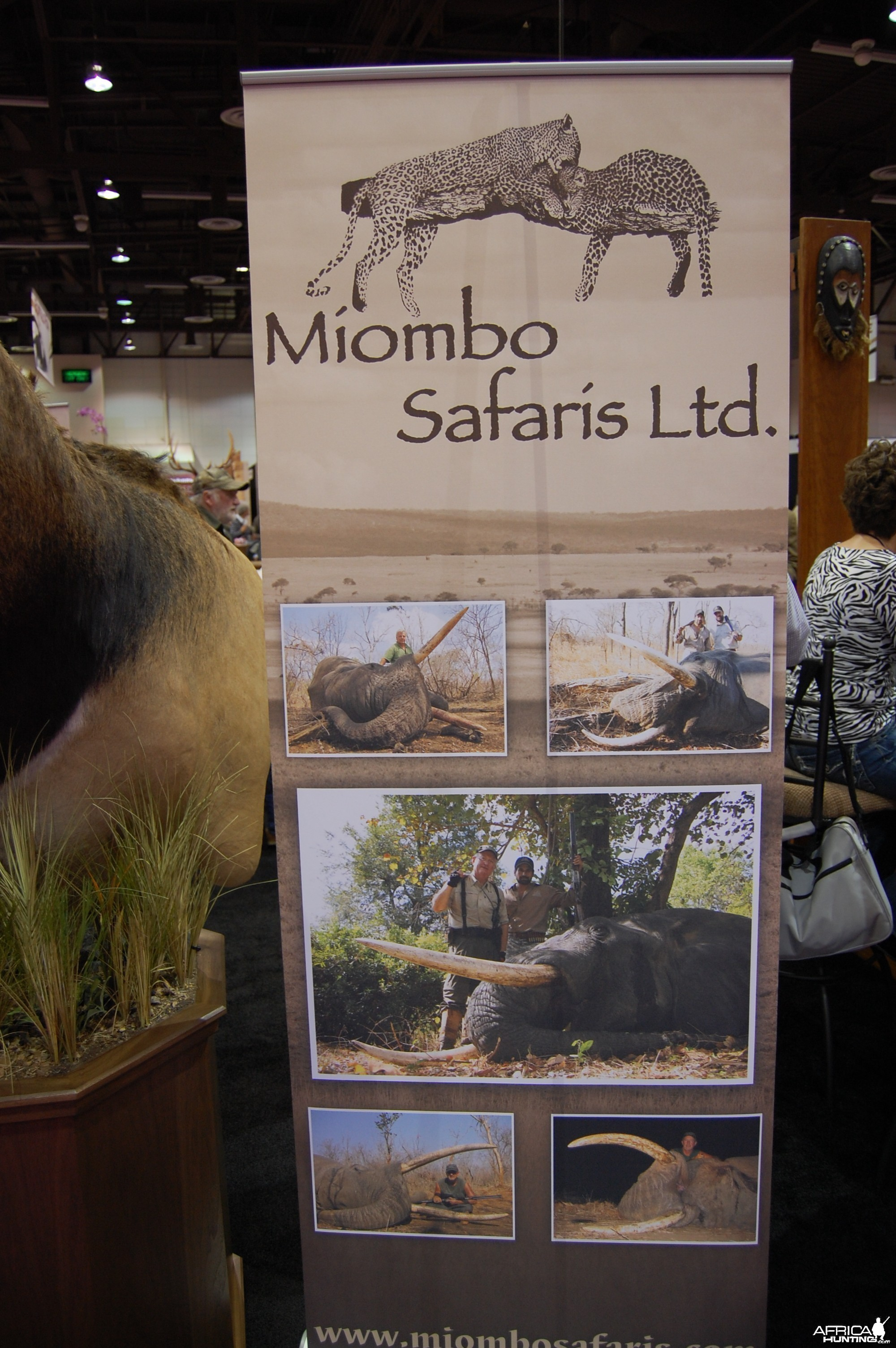 Miombo Safaris