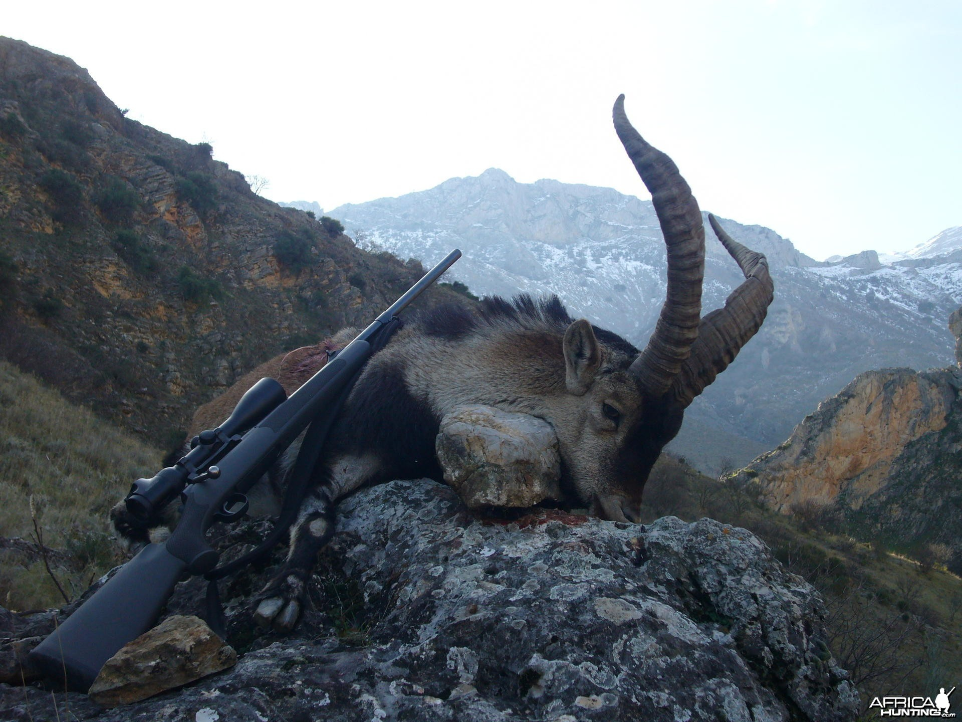 Hunting Spanish Ibex