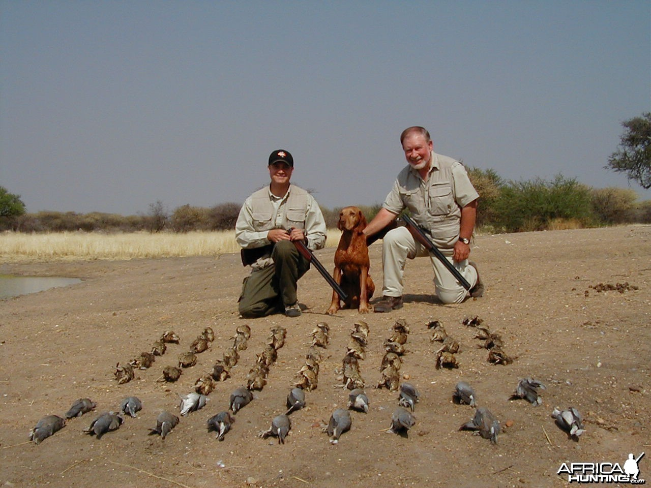Sand Grouse & Dove Hunting in Namibia