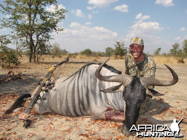 Bowhunting Cookson Wildebeest in Zambia