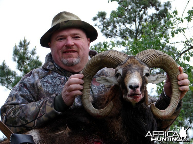 Bowhunting Red Sheep
