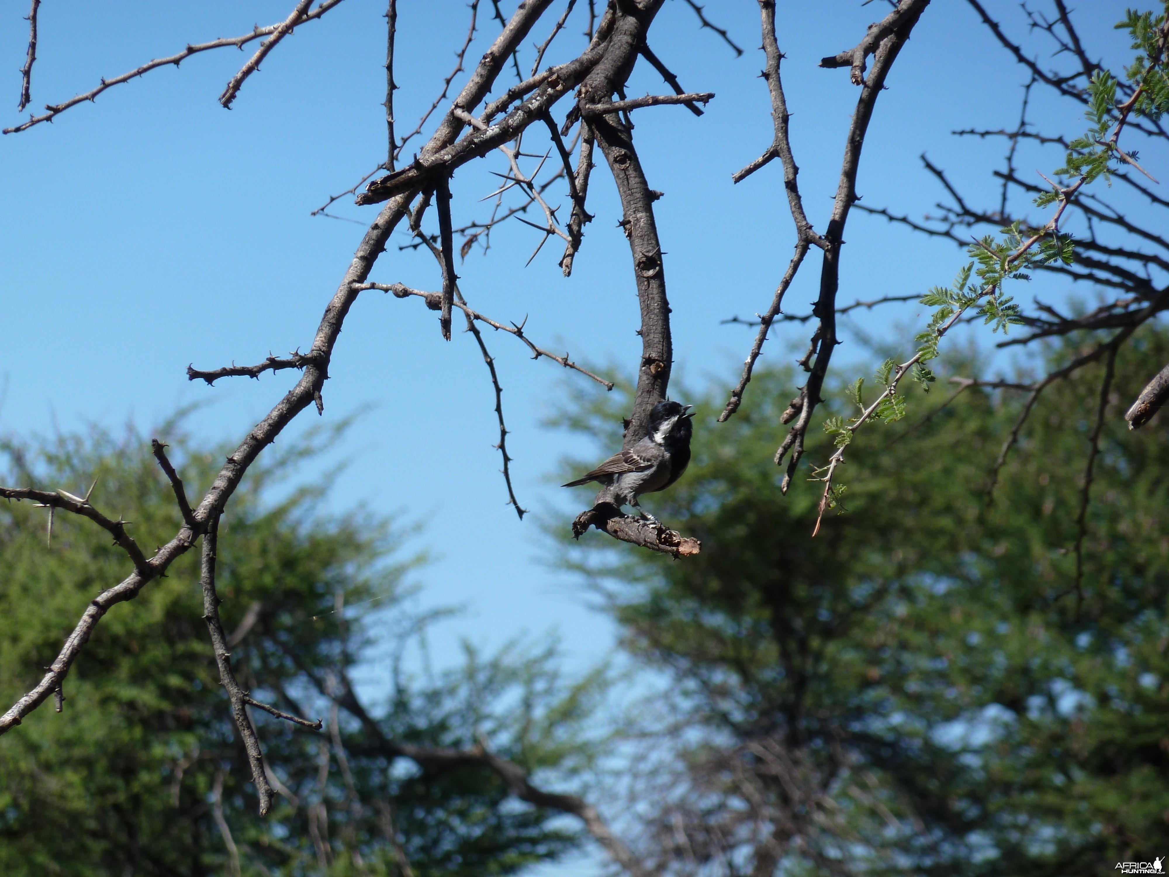 Bird Namibia