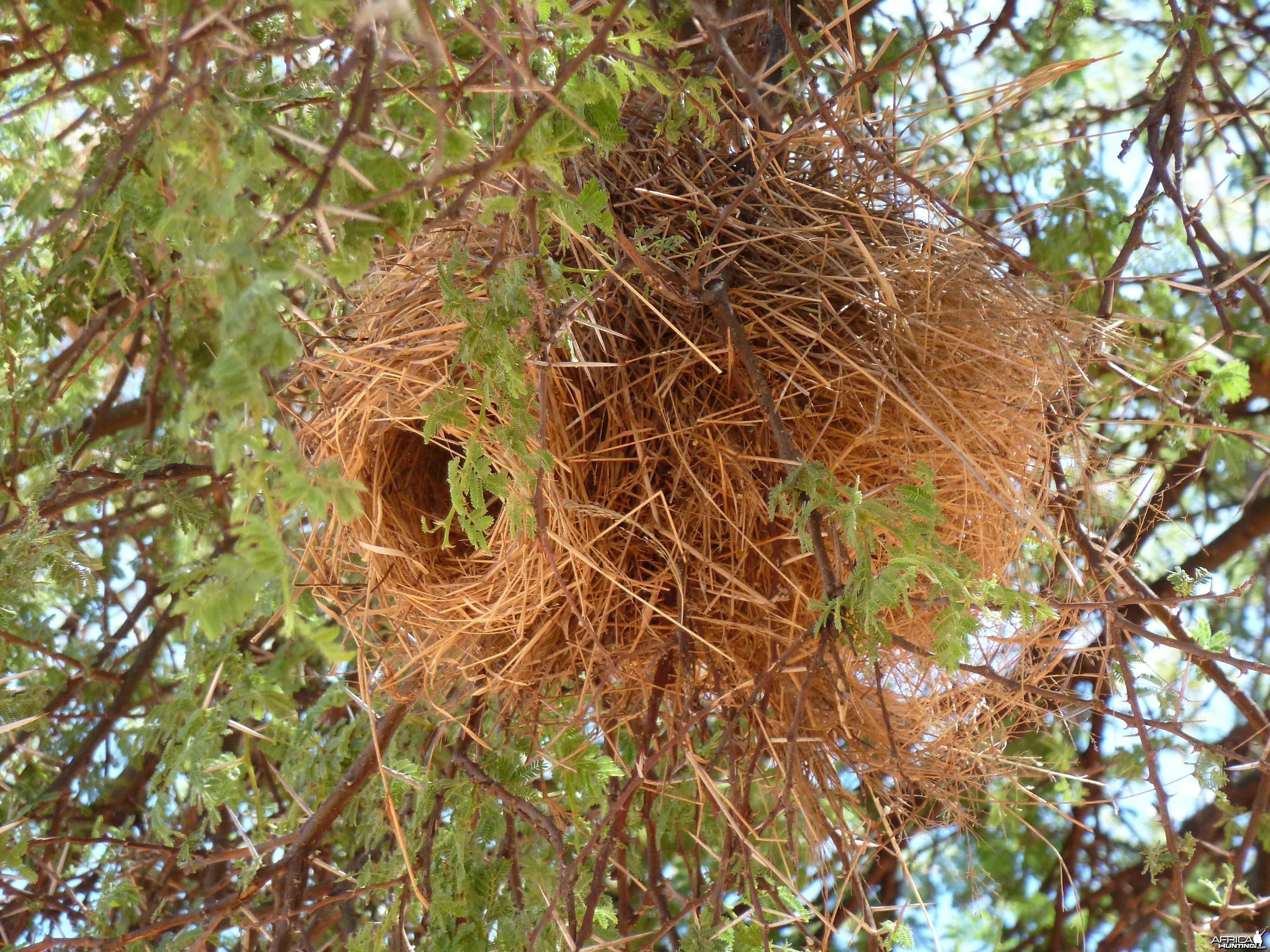 Nest Namibia