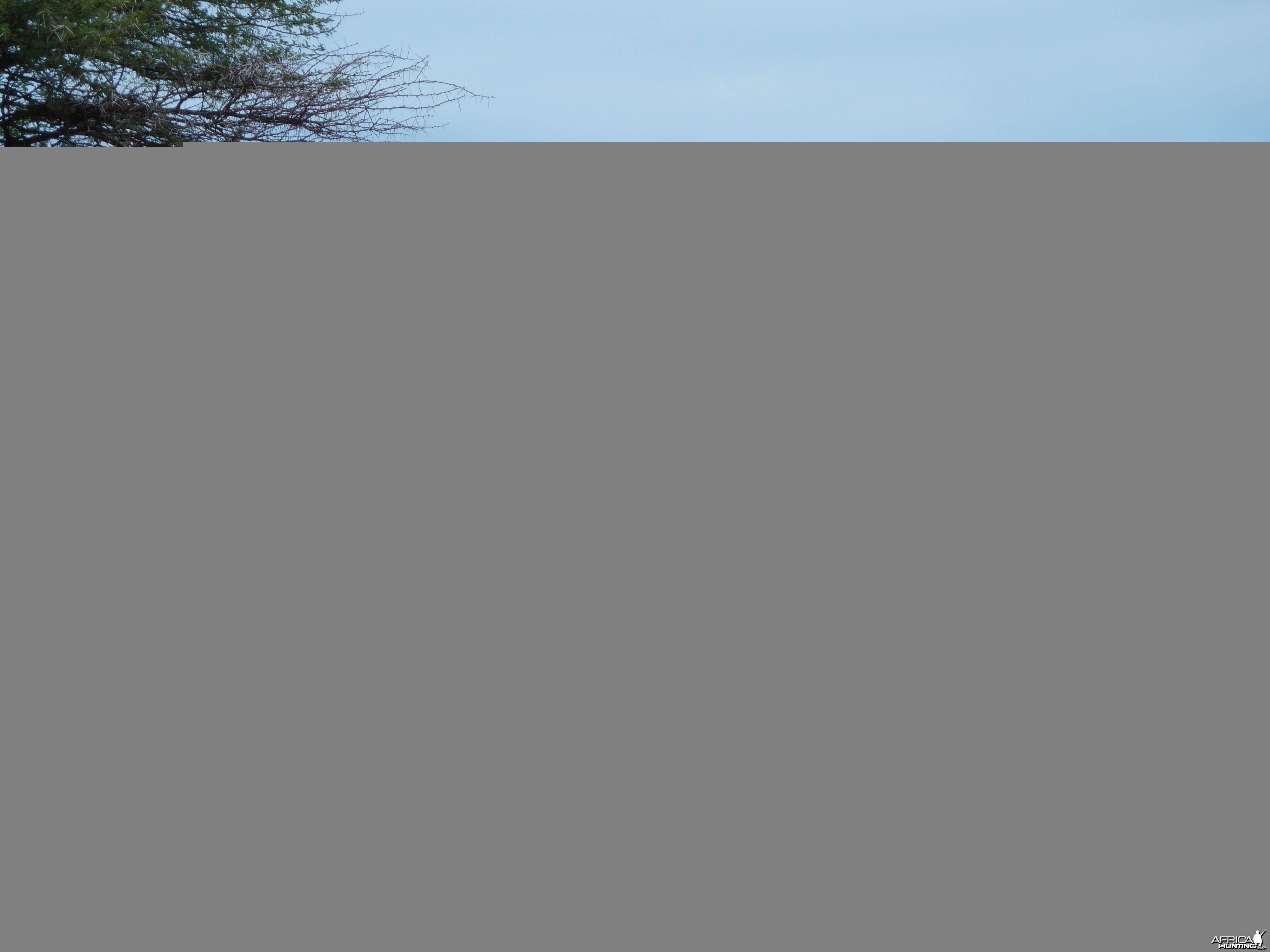 Cape Elands Namibia