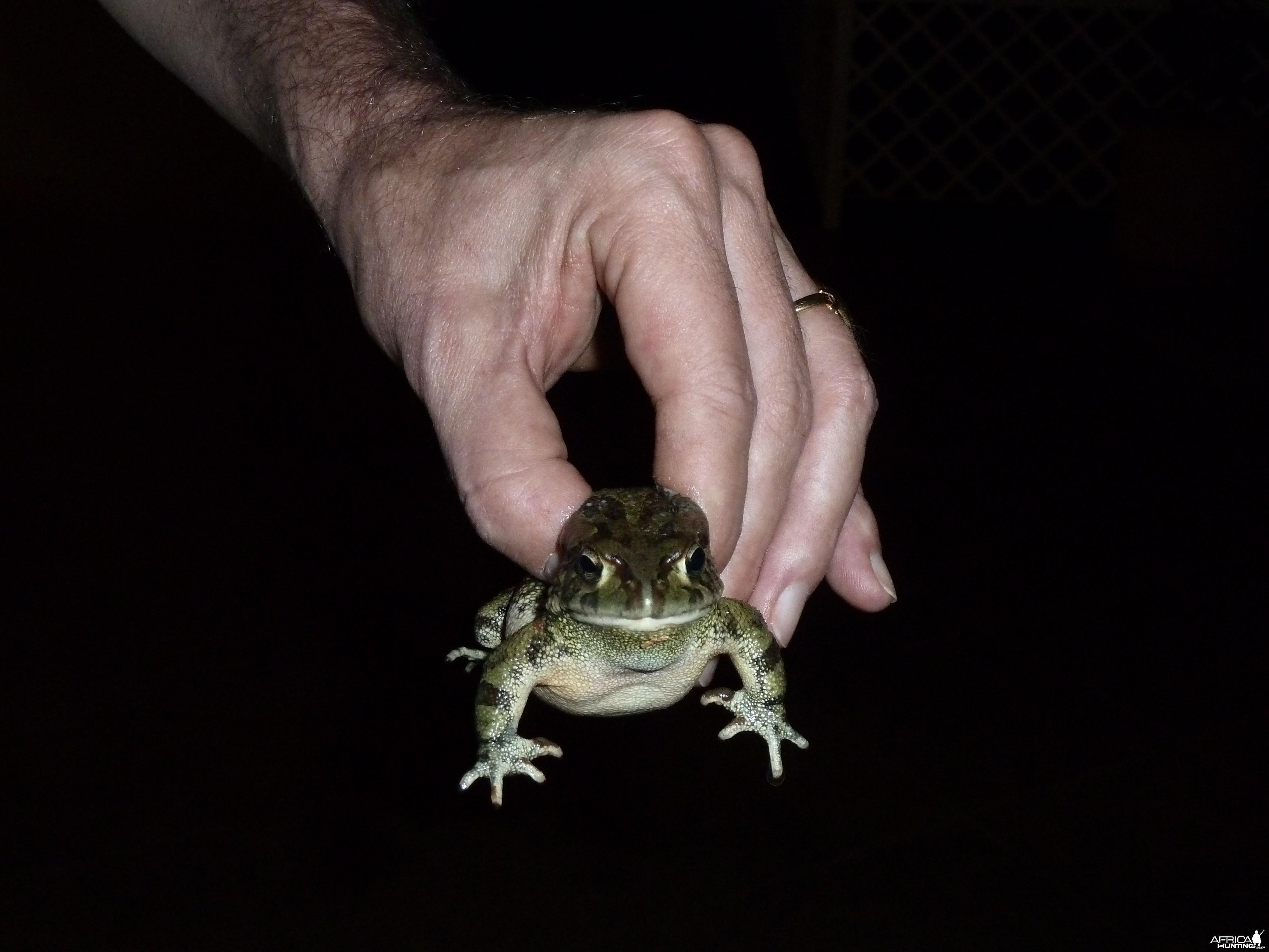 Frog Namibia