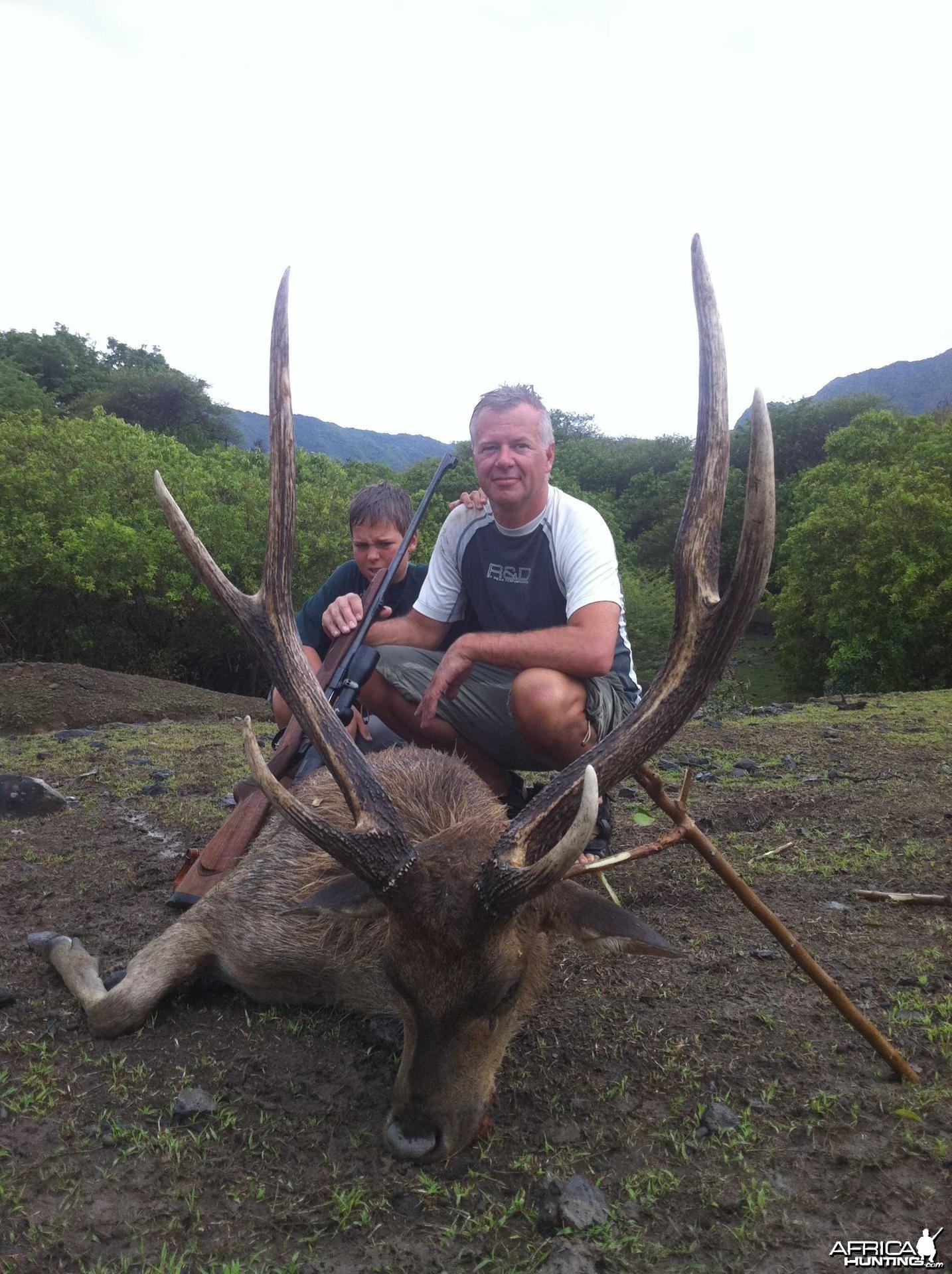 Nice gold medal Rusa Deer stag