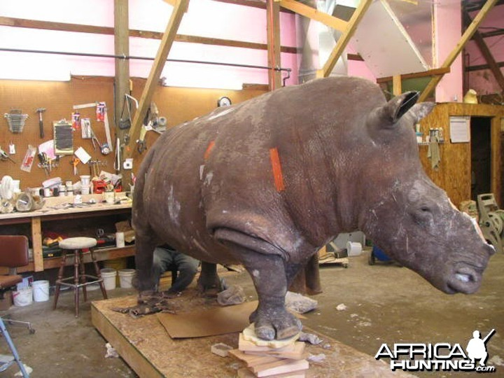 Rhino mounted by Black Creek Taxidermy