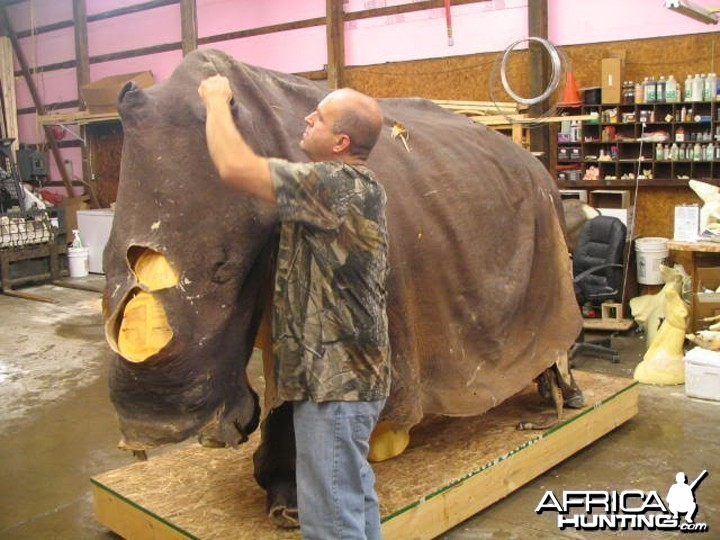 Rhino mounted by Black Creek Taxidermy