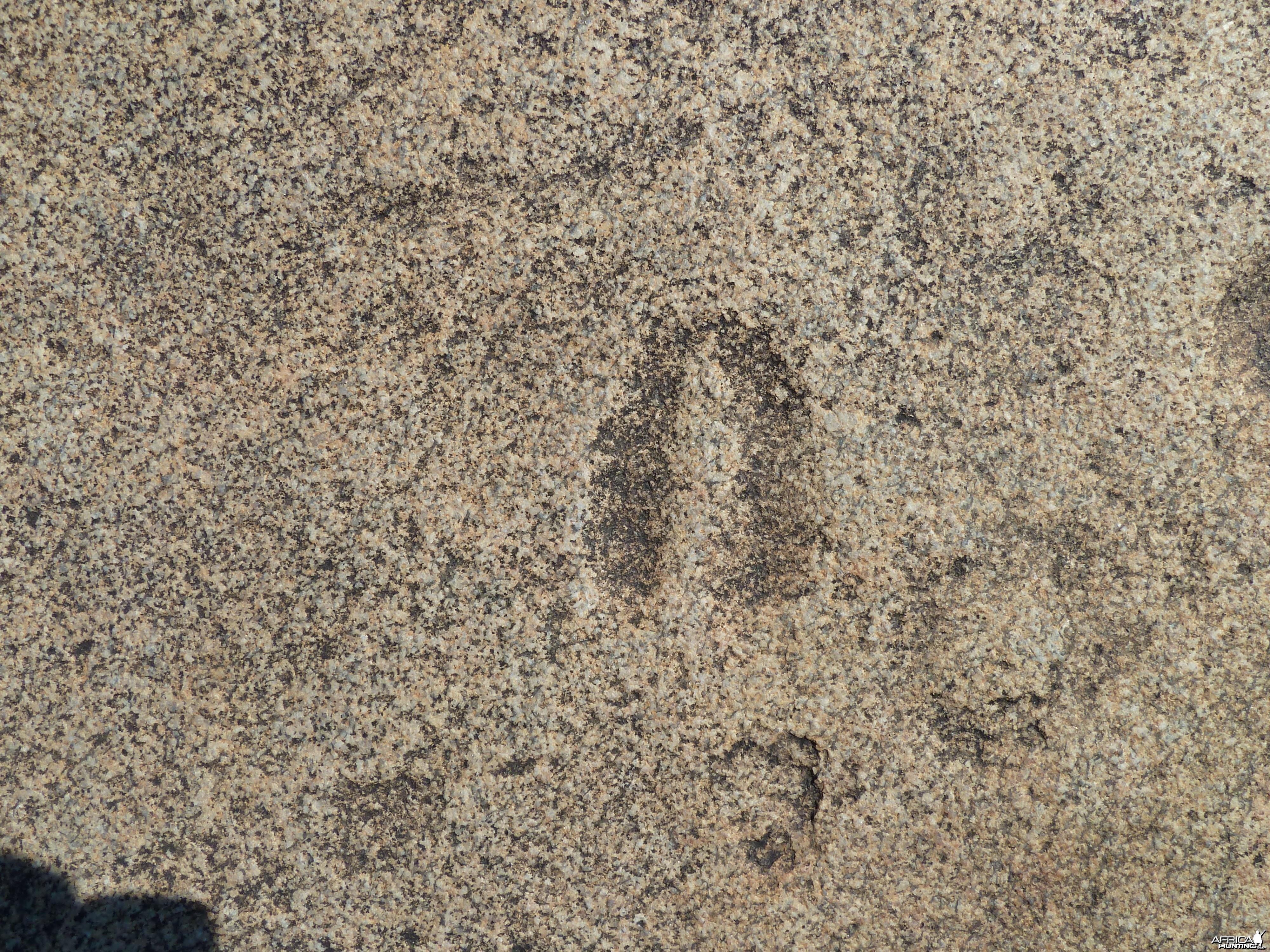 Animal tracks in the rock in Namibia