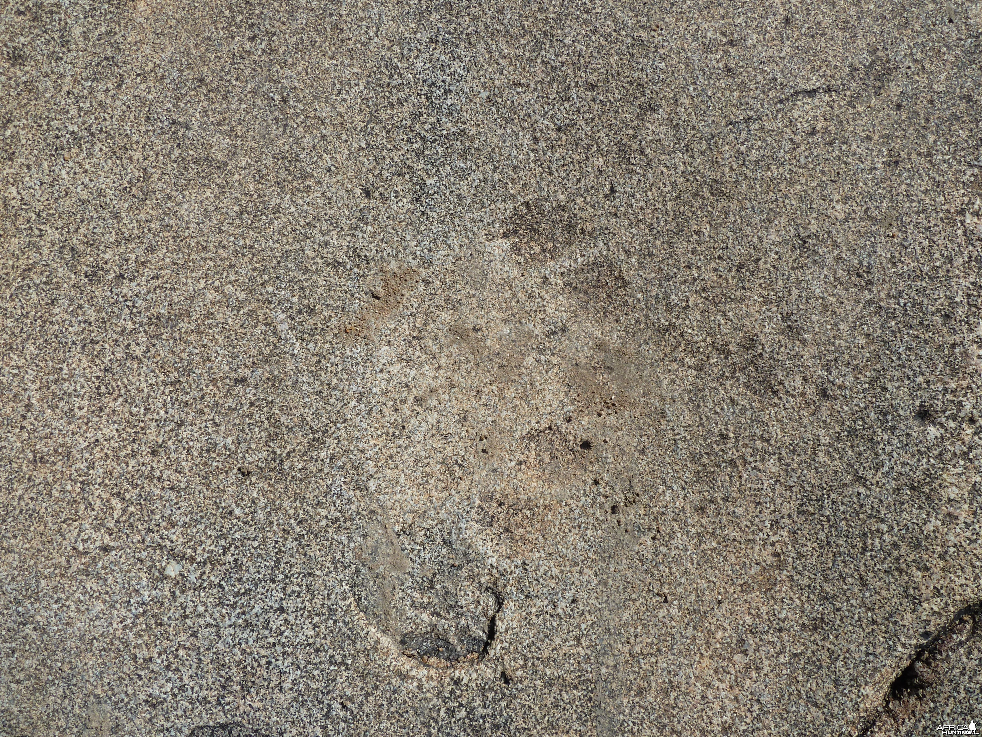 Lion tracks in the rock in Namibia