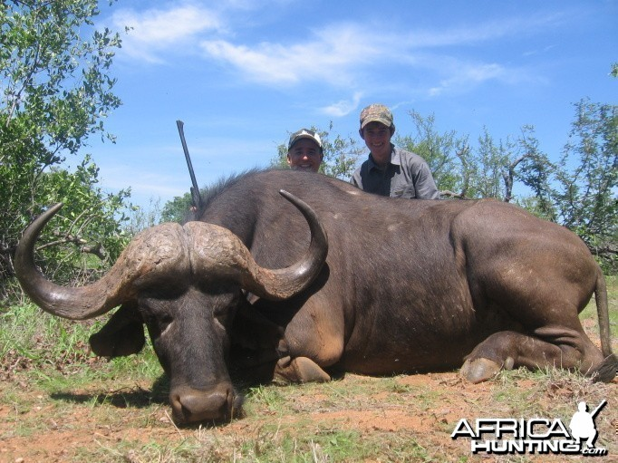 Buffalo hunted with Savanna Hunting Safaris