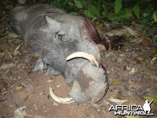 Warthog hunted with CAWA in CAR