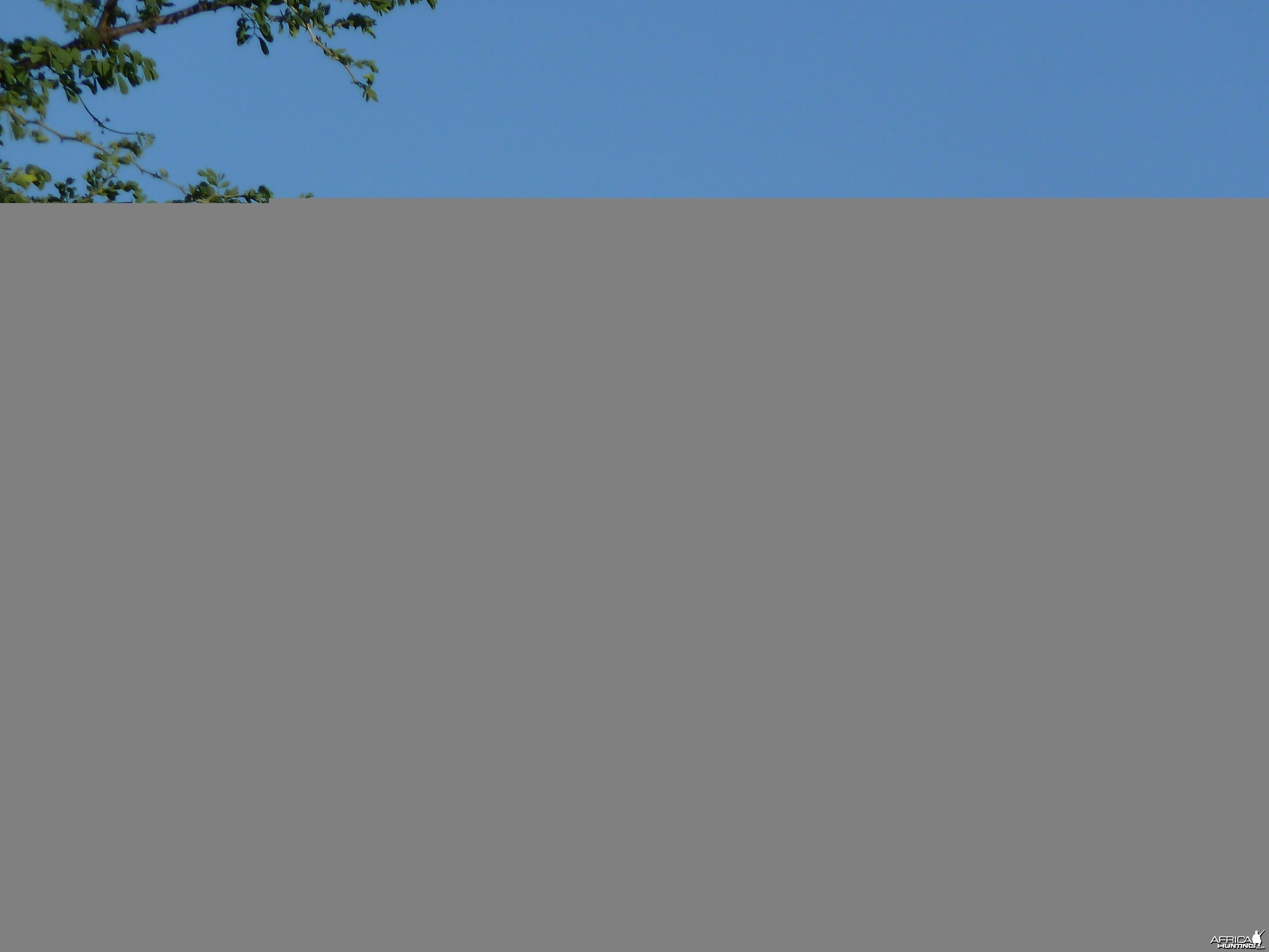 Swallow Namibia