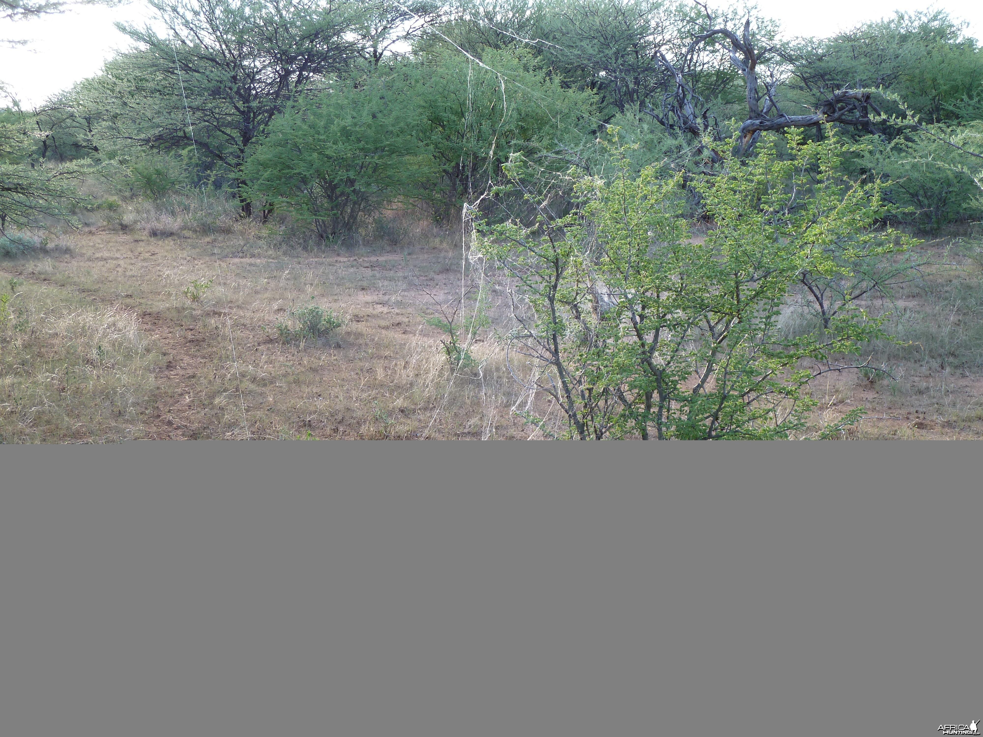Spider Web Namibia