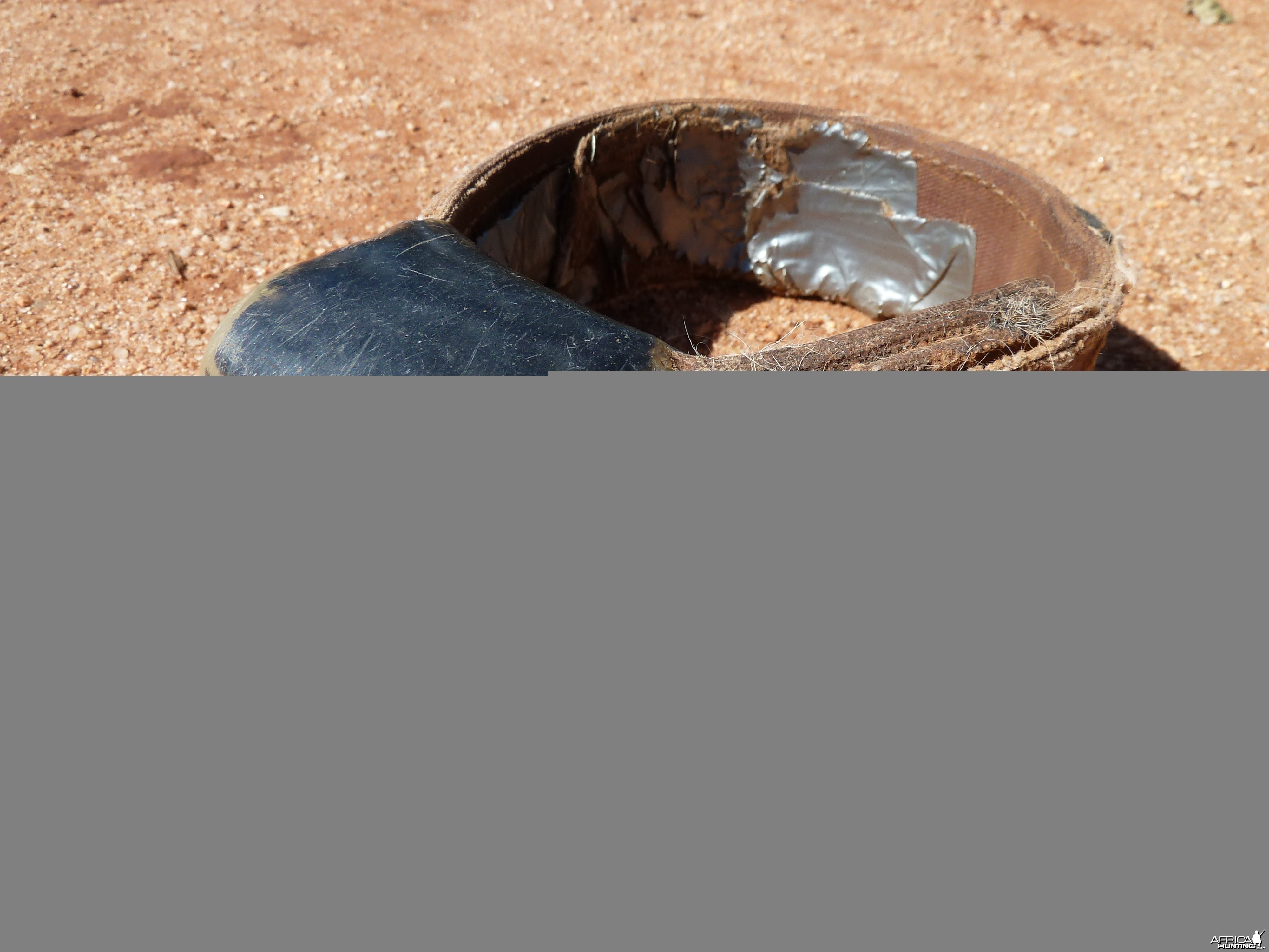 Radio Collar found on dead Caracal