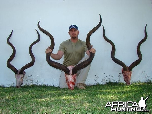 Middle Kudu 59 3/4 inches
