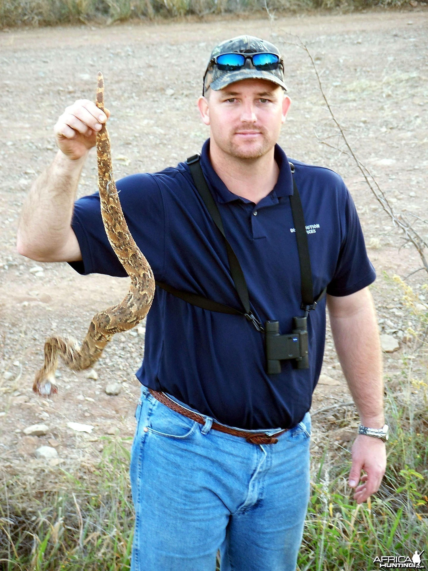 Puff Adder South Africa