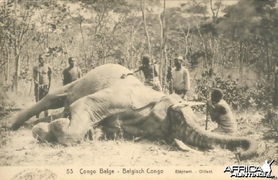 Elephant Hunting in Congo