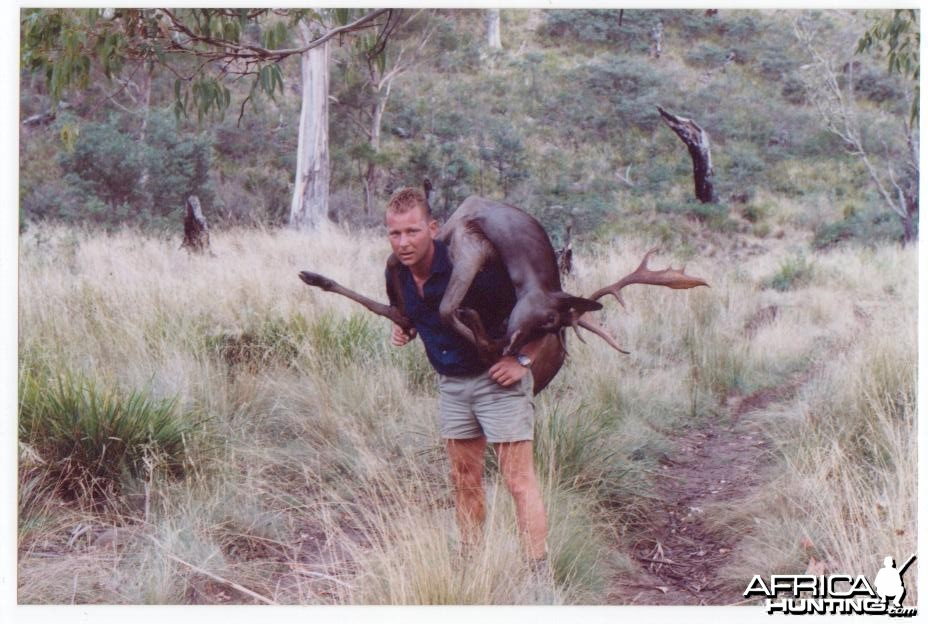 Carrying out a Fallow buck, Midlands, Tasmania.