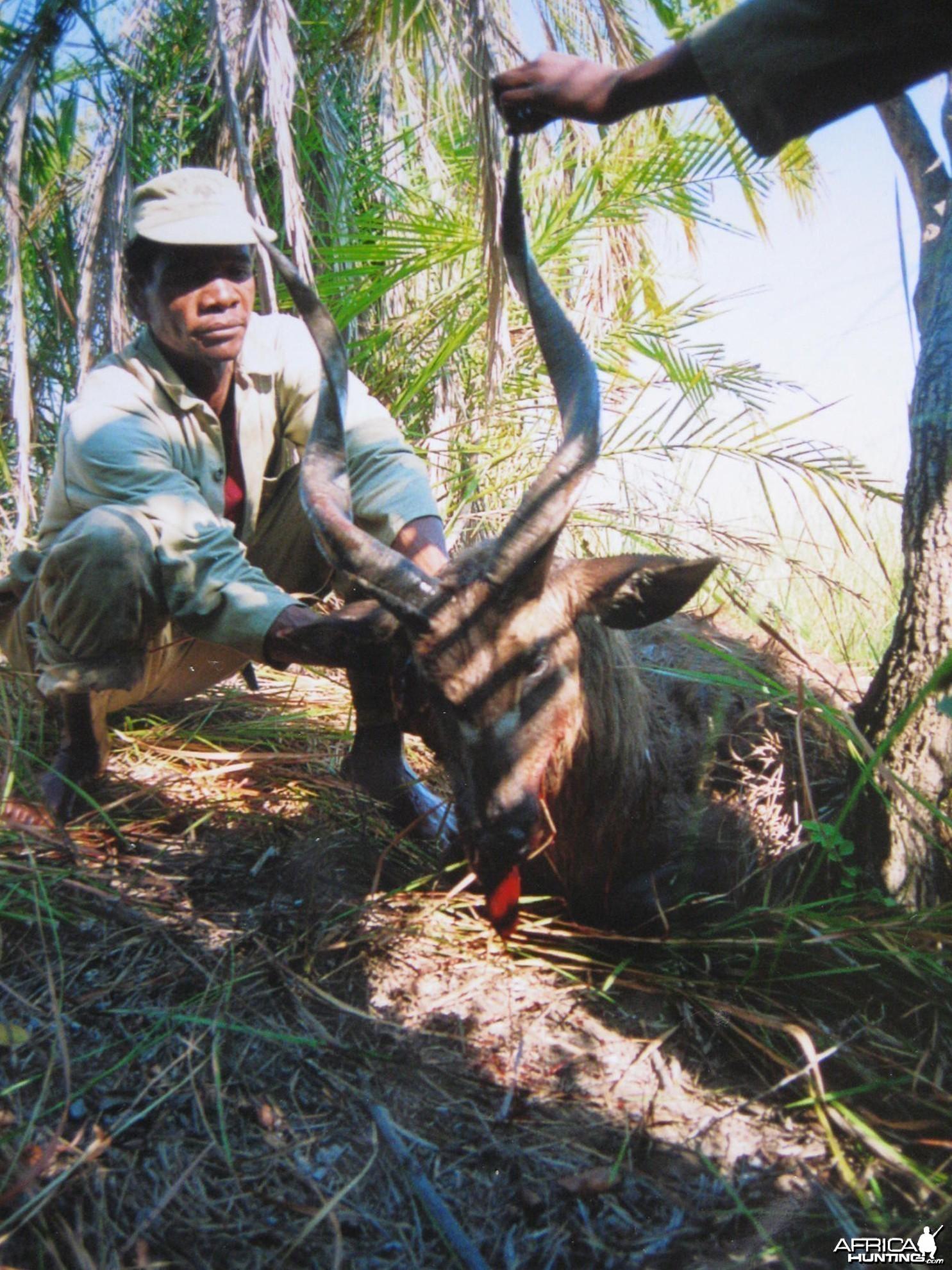 Hunting Sitatunga